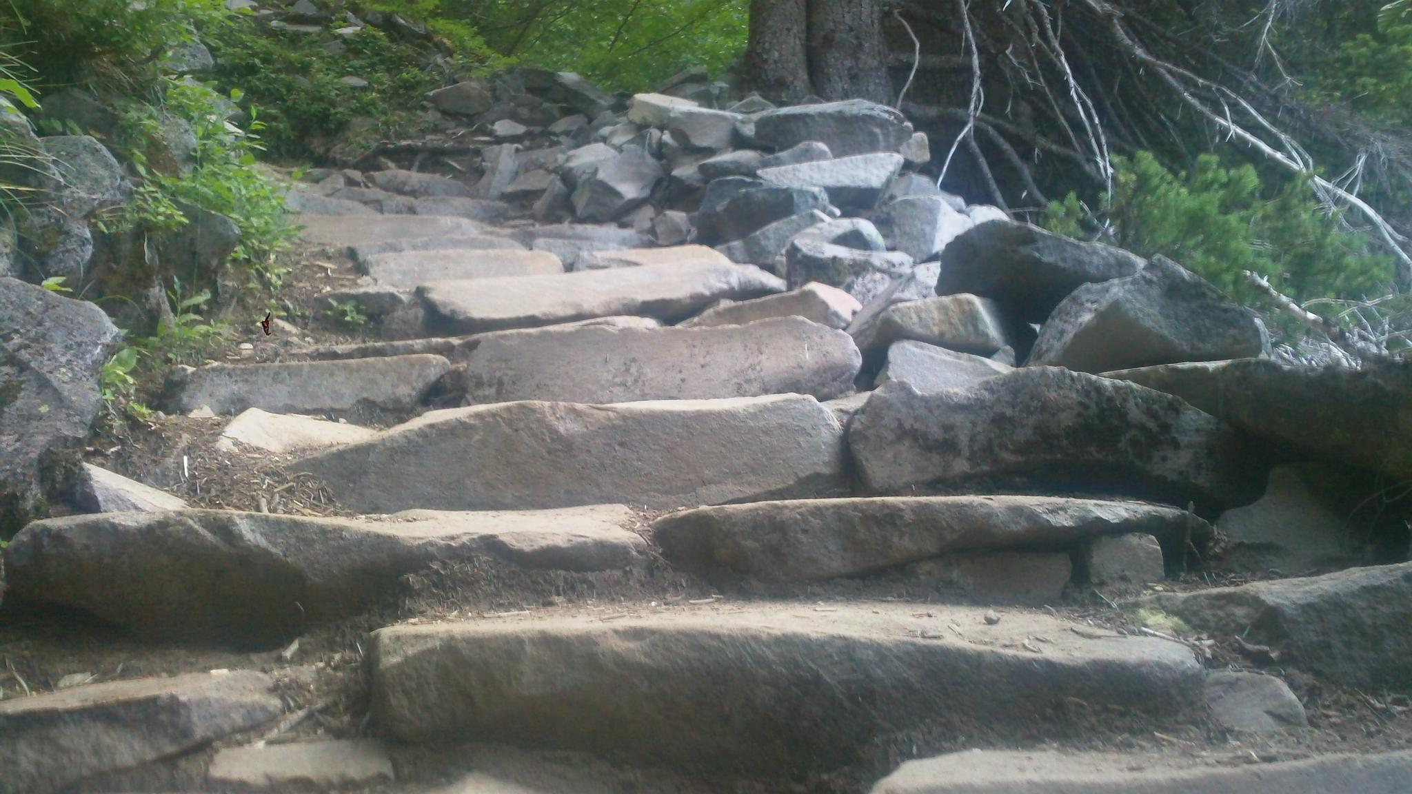 Spray Park Trail ~ Mount Rainier National Park by David Bartle