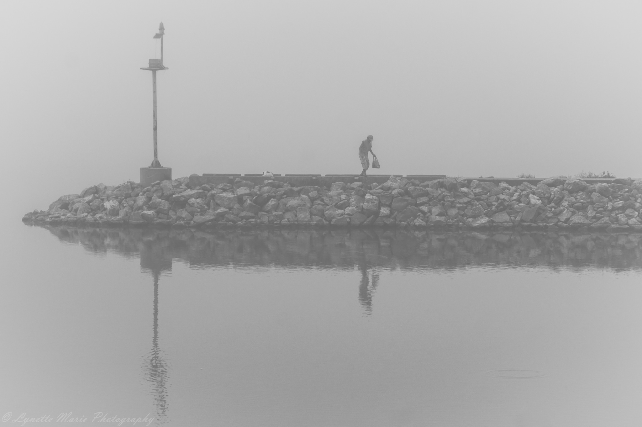 Man Searches in the Fog by Lynette M. Feliciano-Justice