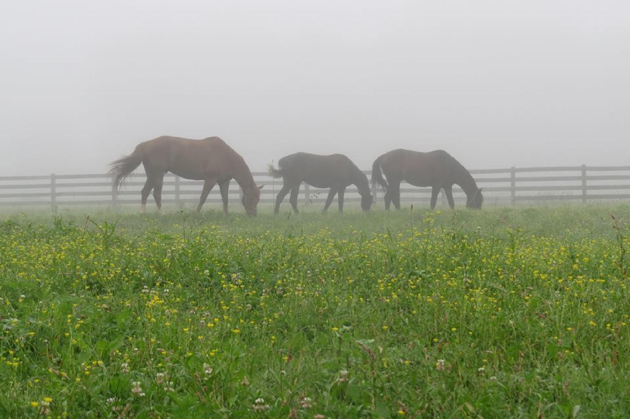 Muggy Summer Morning by sarahjones1624