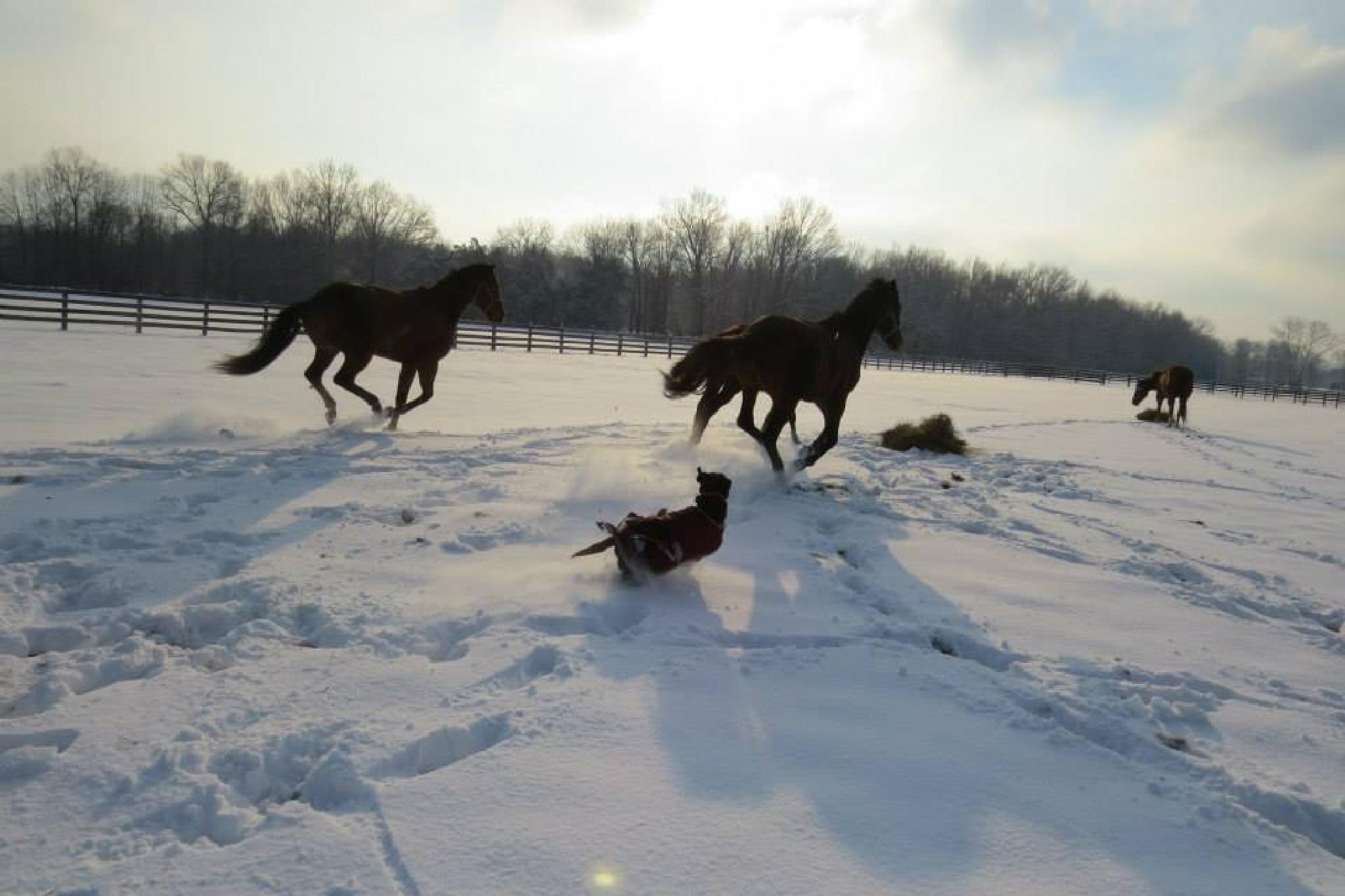 Winter Fun by sarahjones1624