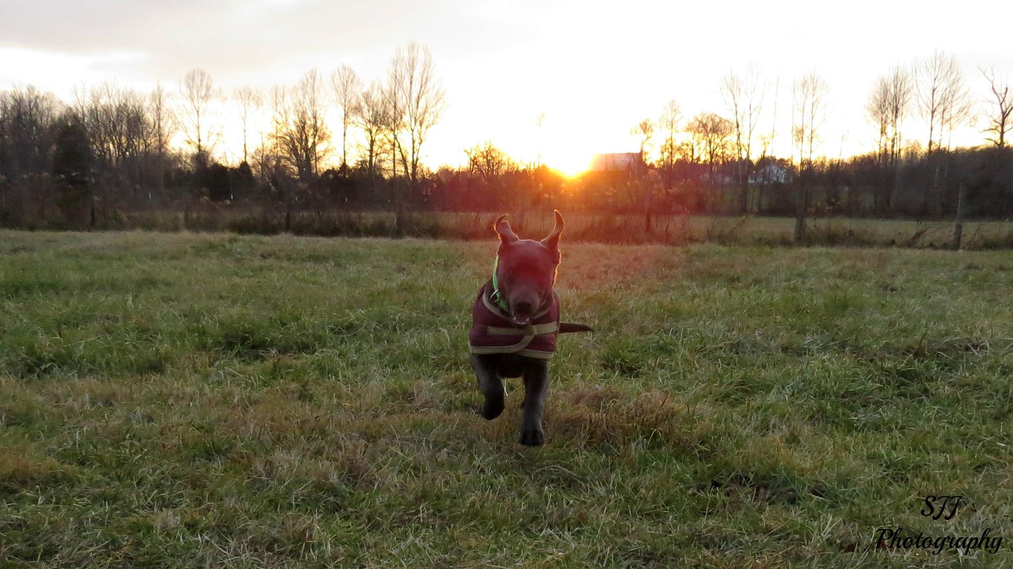 Exuberant Puppy by sarahjones1624