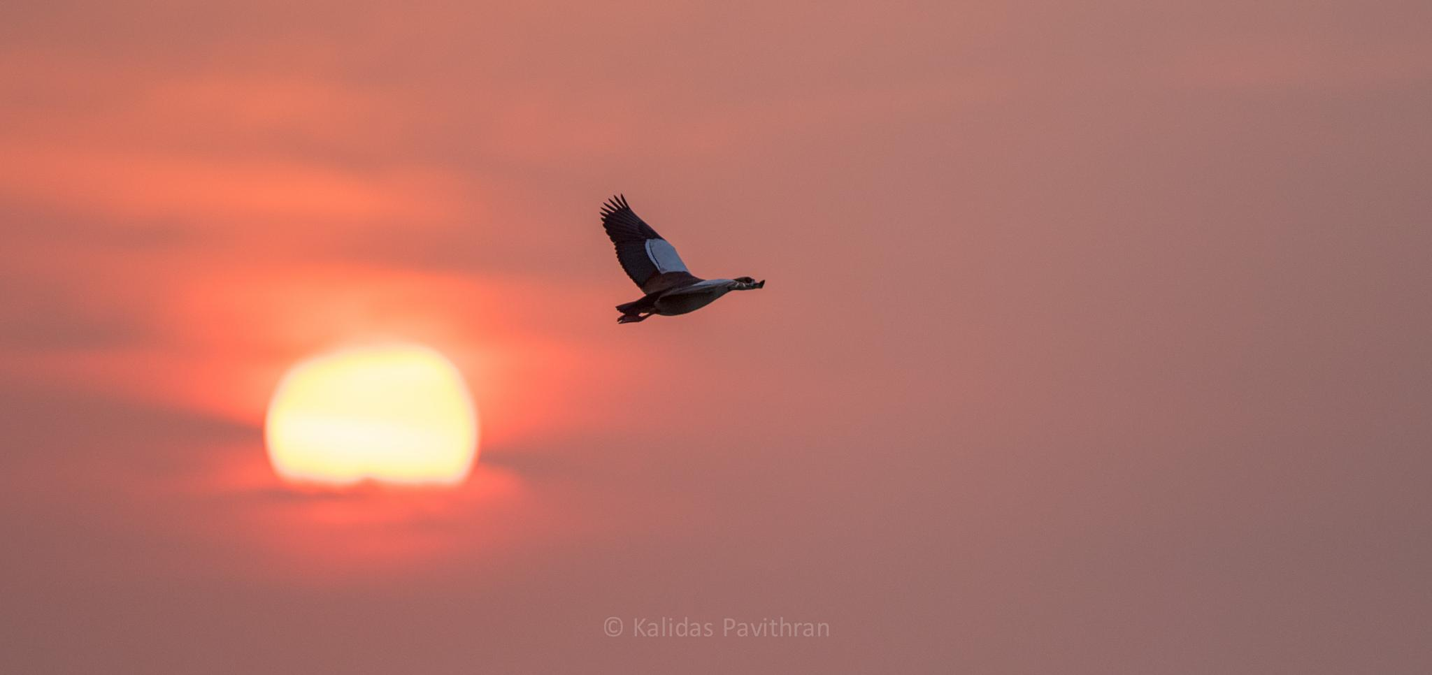 Flying High by Kalidas Pavithran