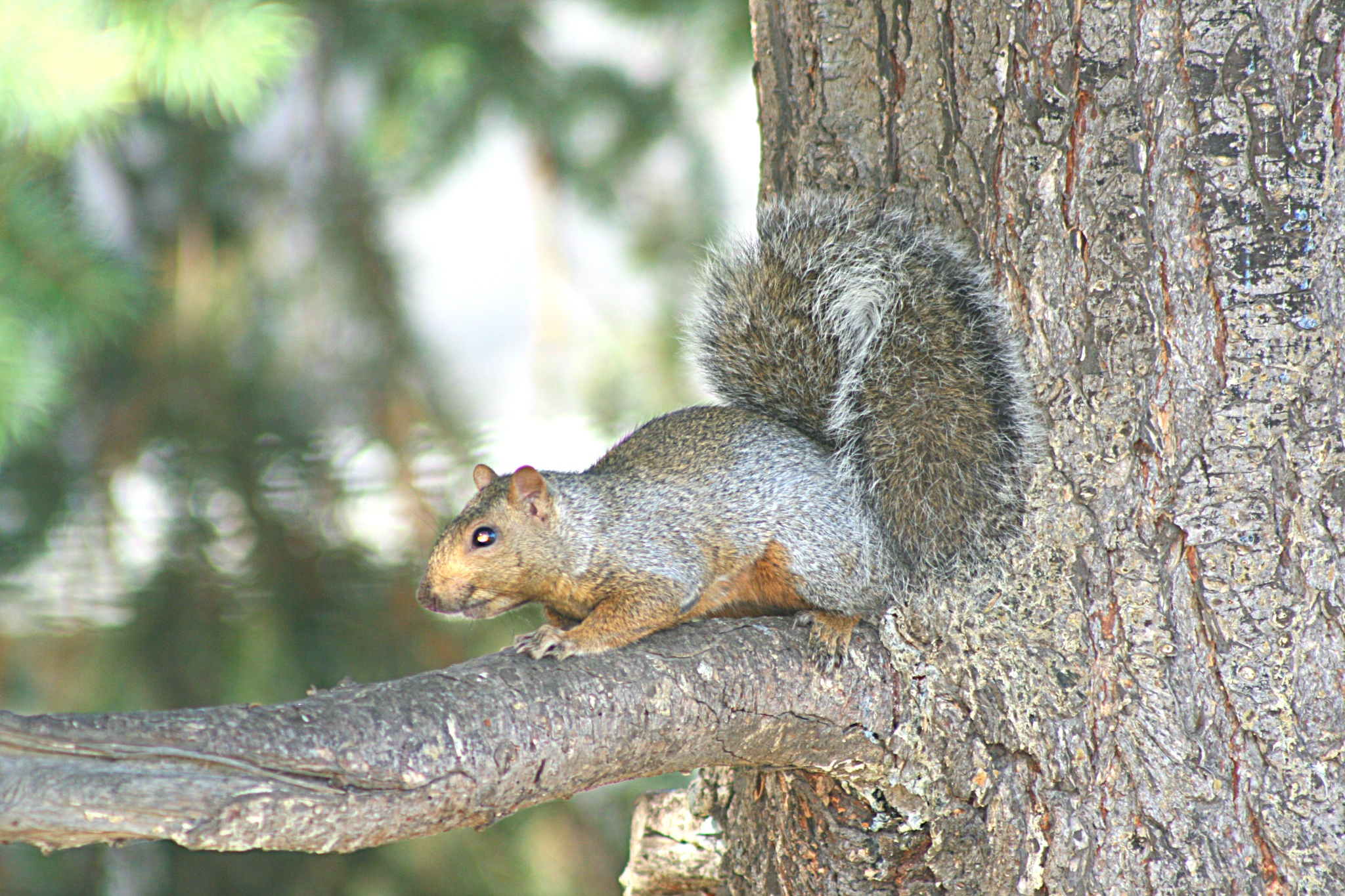 squirrel! by melody.perkins.146