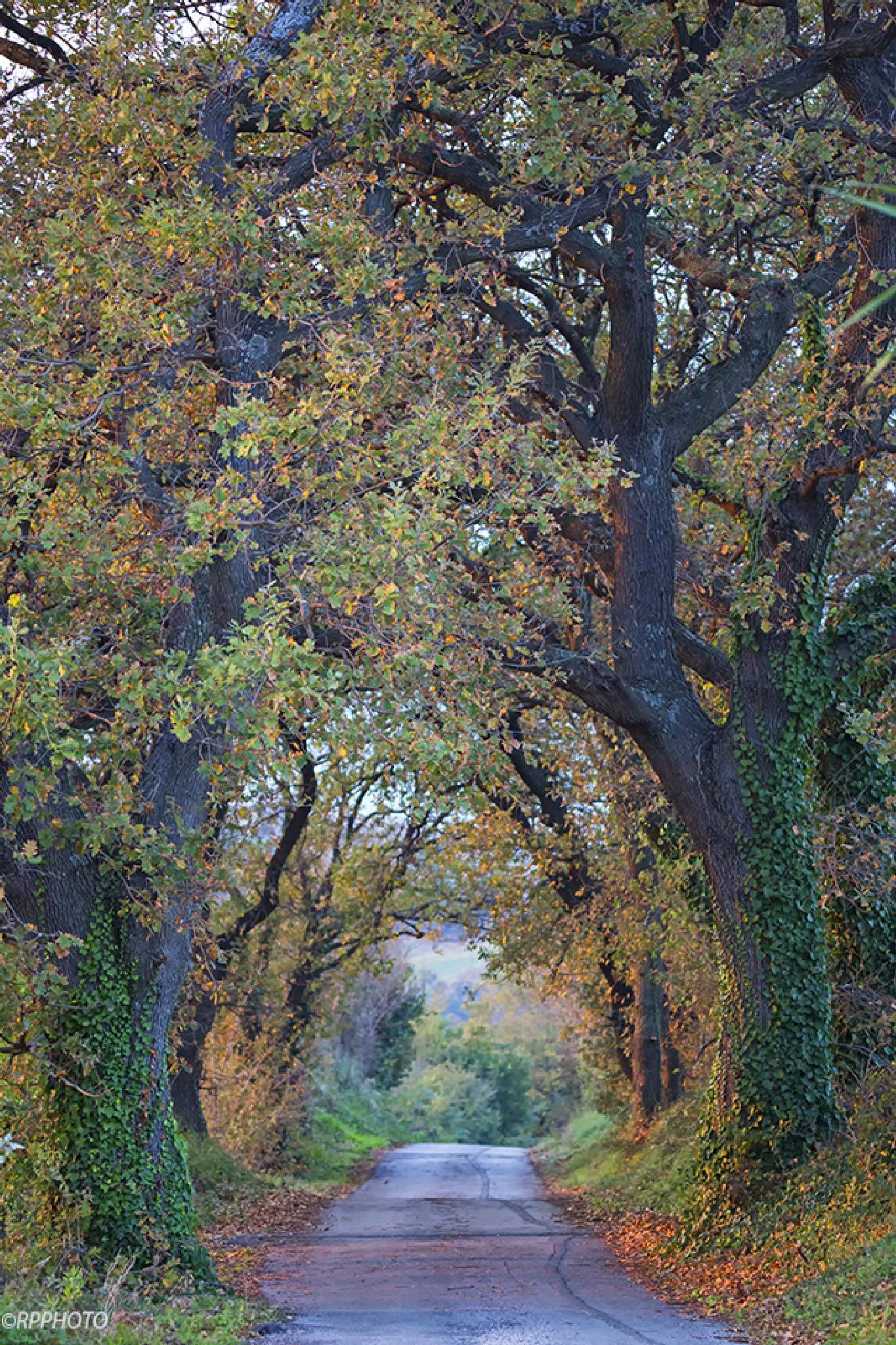 Gallery autumn. by RPphoto