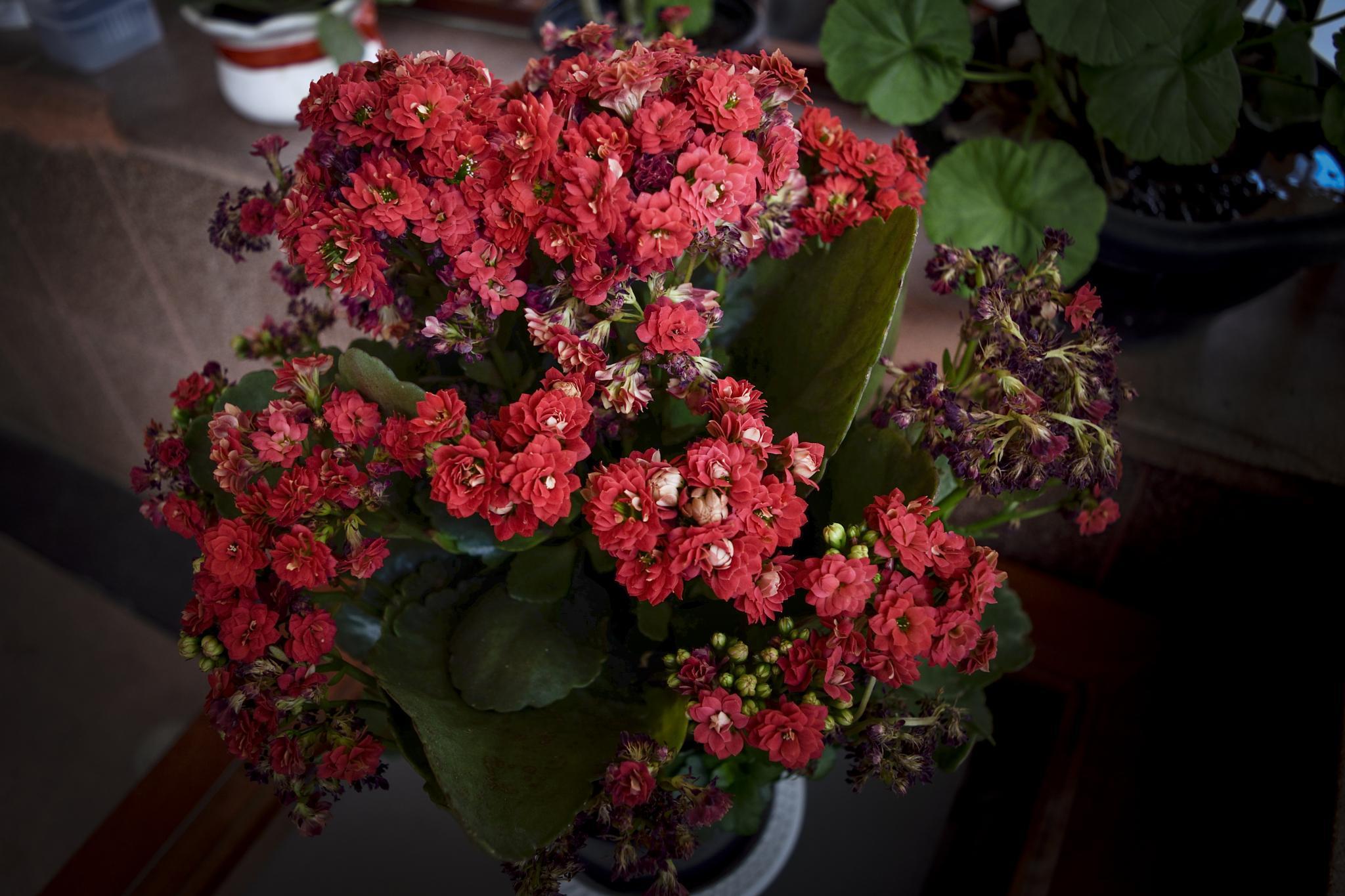 Flowers by maurofonseca