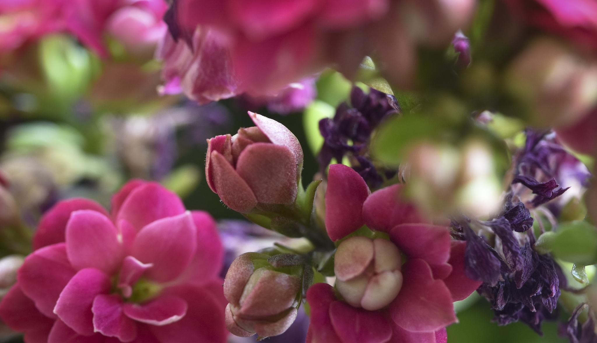 Tiny Flower by maurofonseca