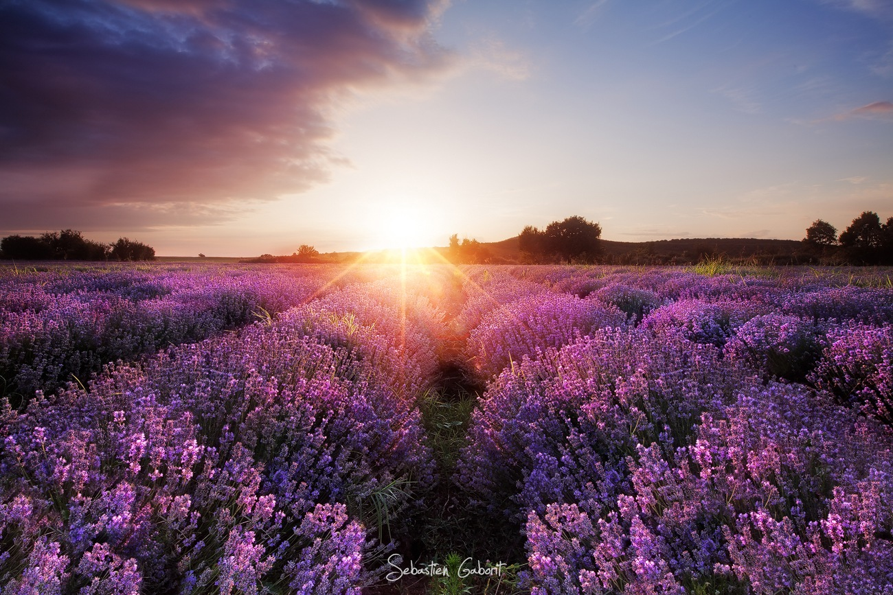 Lavender Dream. by Sebastien Gaborit