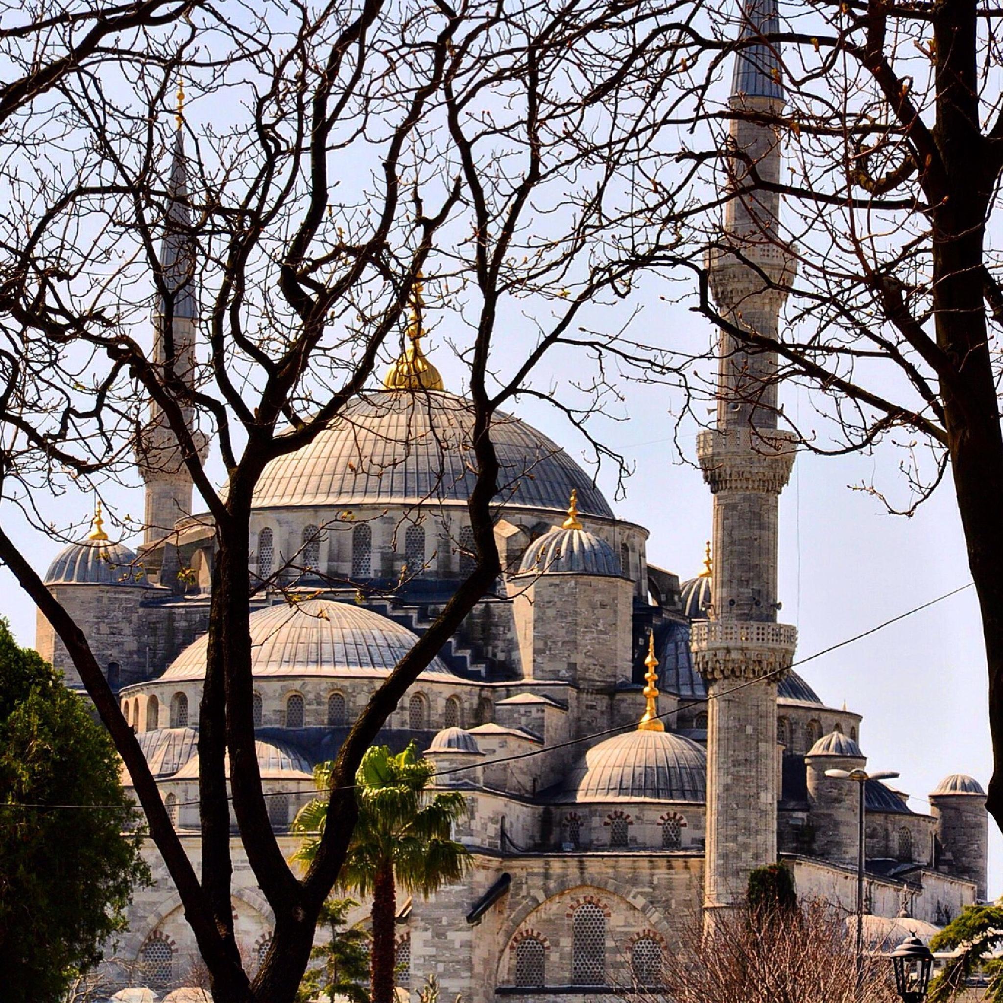 Mosque through autumn tree  by wyler.devotta