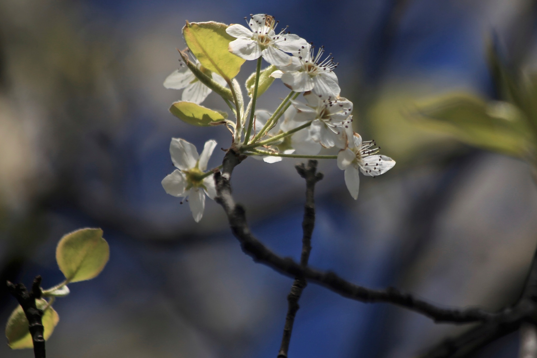 A Glorious Flowering by Patryce Haltiwanger Phillips