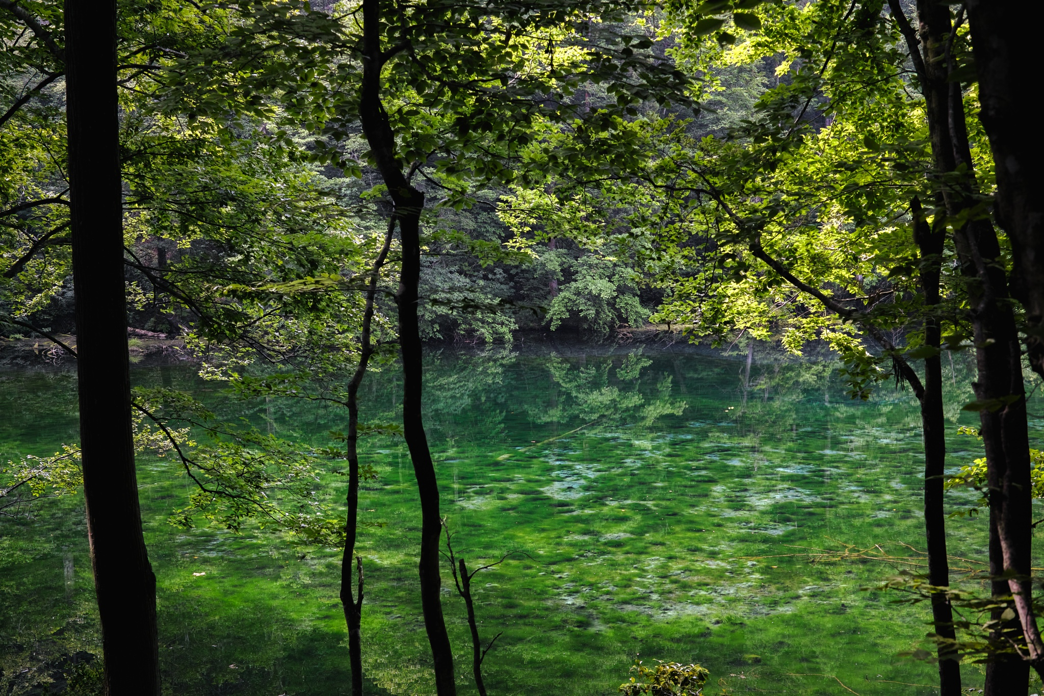 Pond that has been protected by the dragon by Takafumi Ooshio