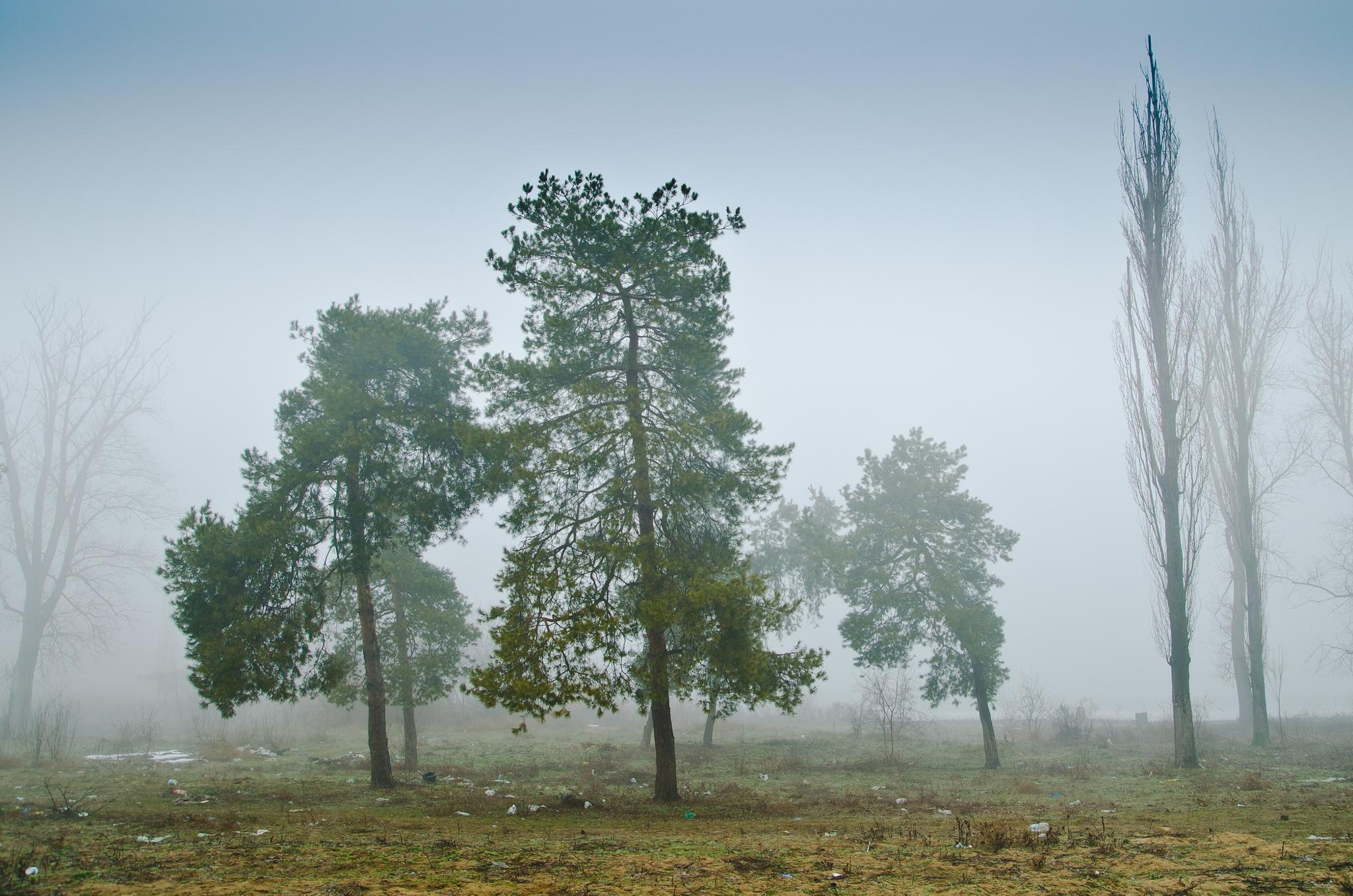 trees in the mist by Dan Cristian
