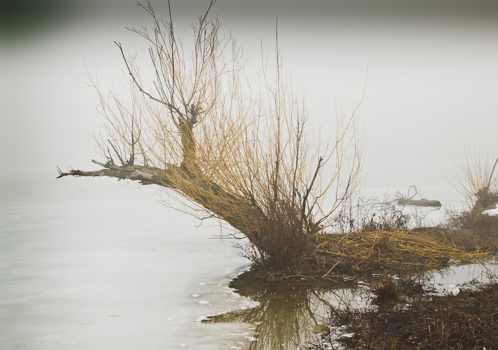 Solitude by Dan Cristian