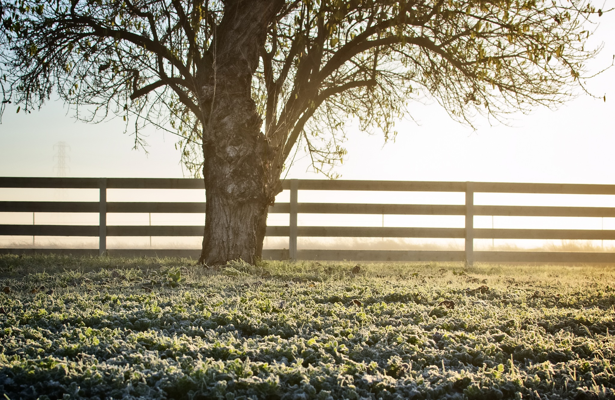 Morning Frost by tammy.arruda