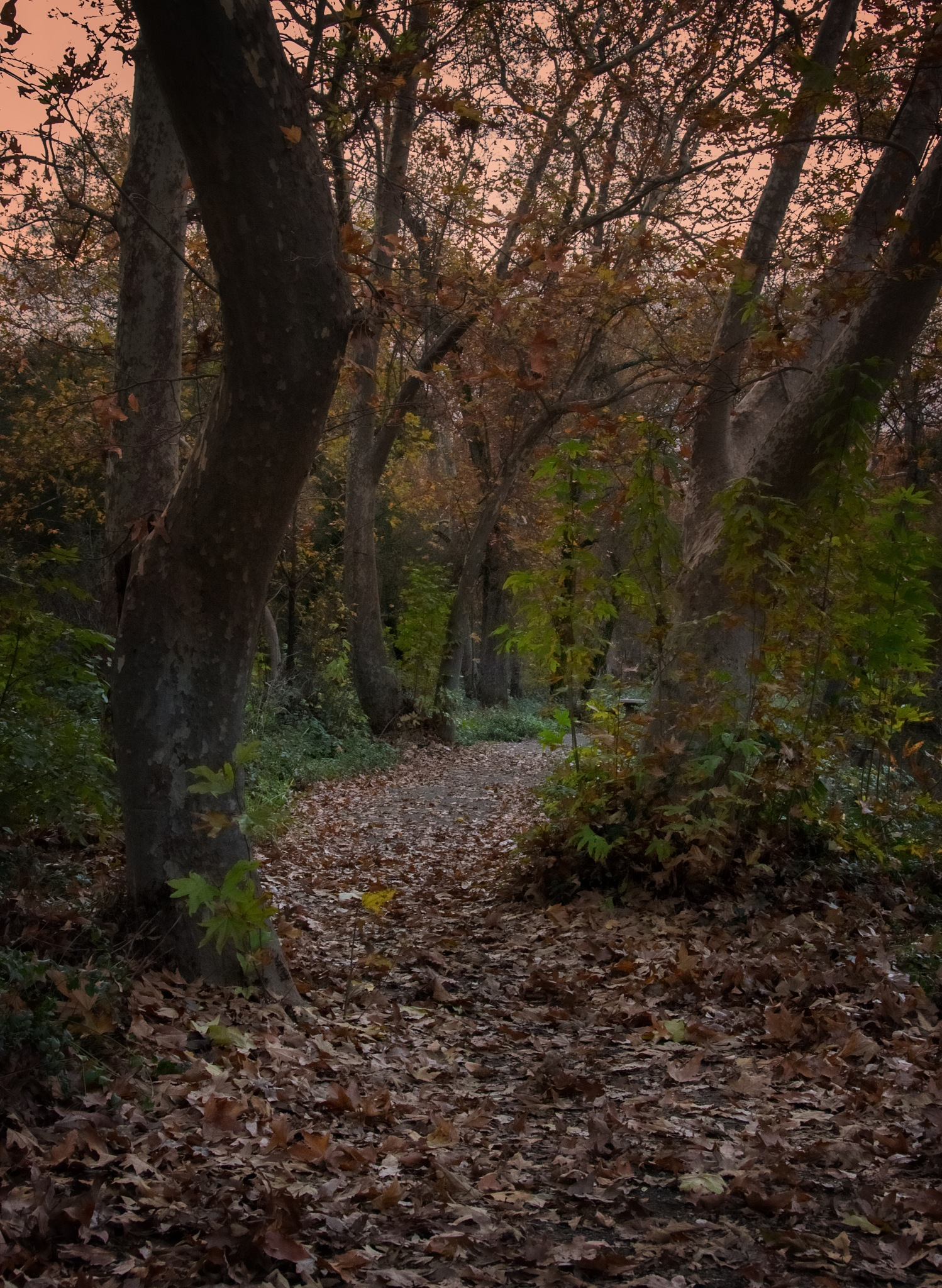 Follow your path by tammy.arruda