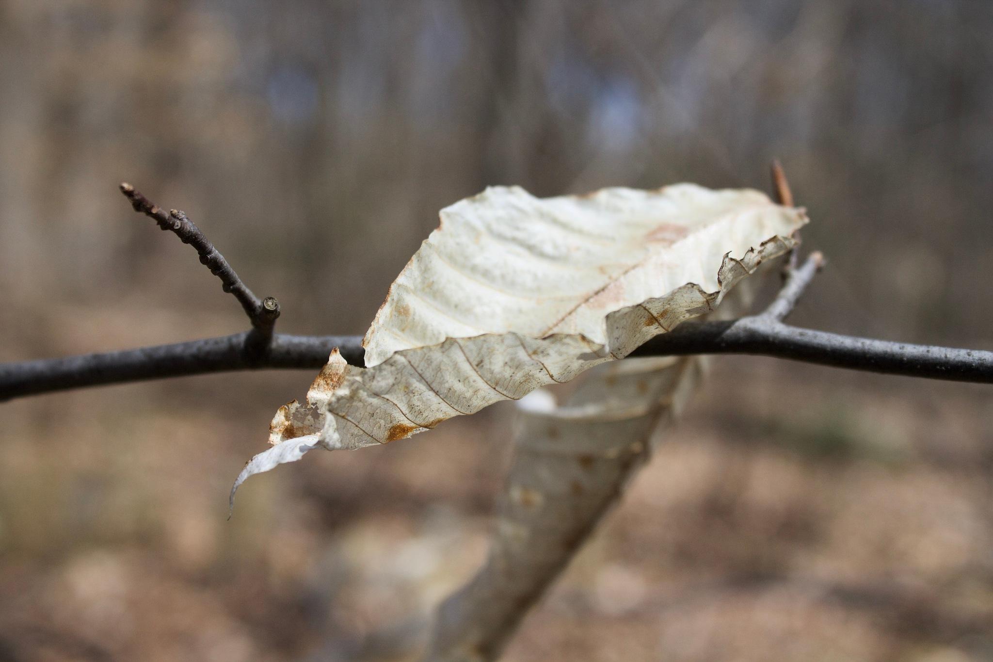Autumn Leftover by JoJoK