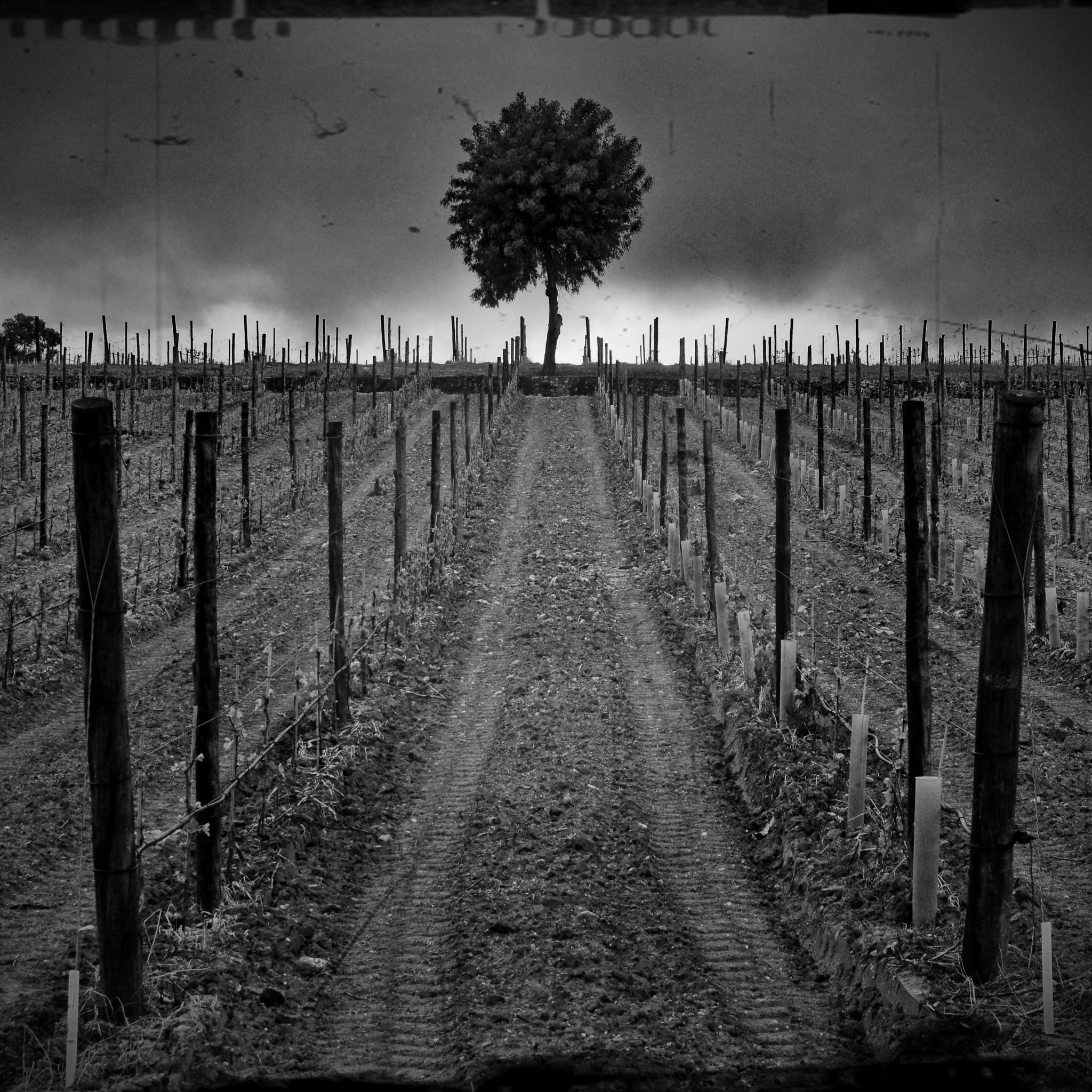 the lonely tree by electra.kgb