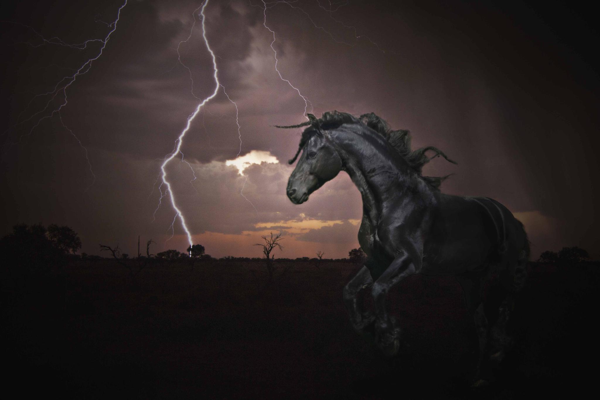 Friesan Storm by AlisonKekewichDuncan