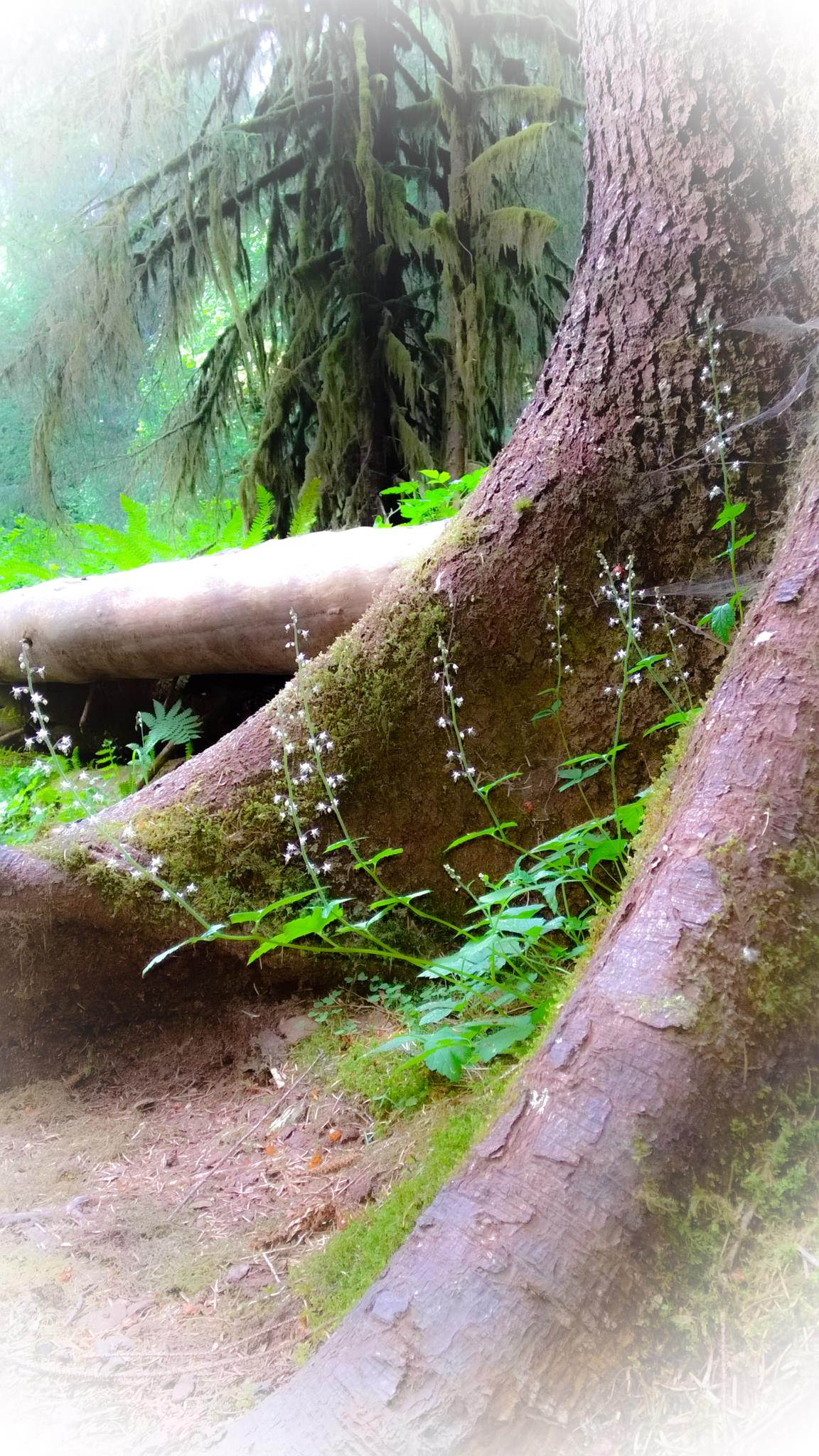 rooted in peace by Angela