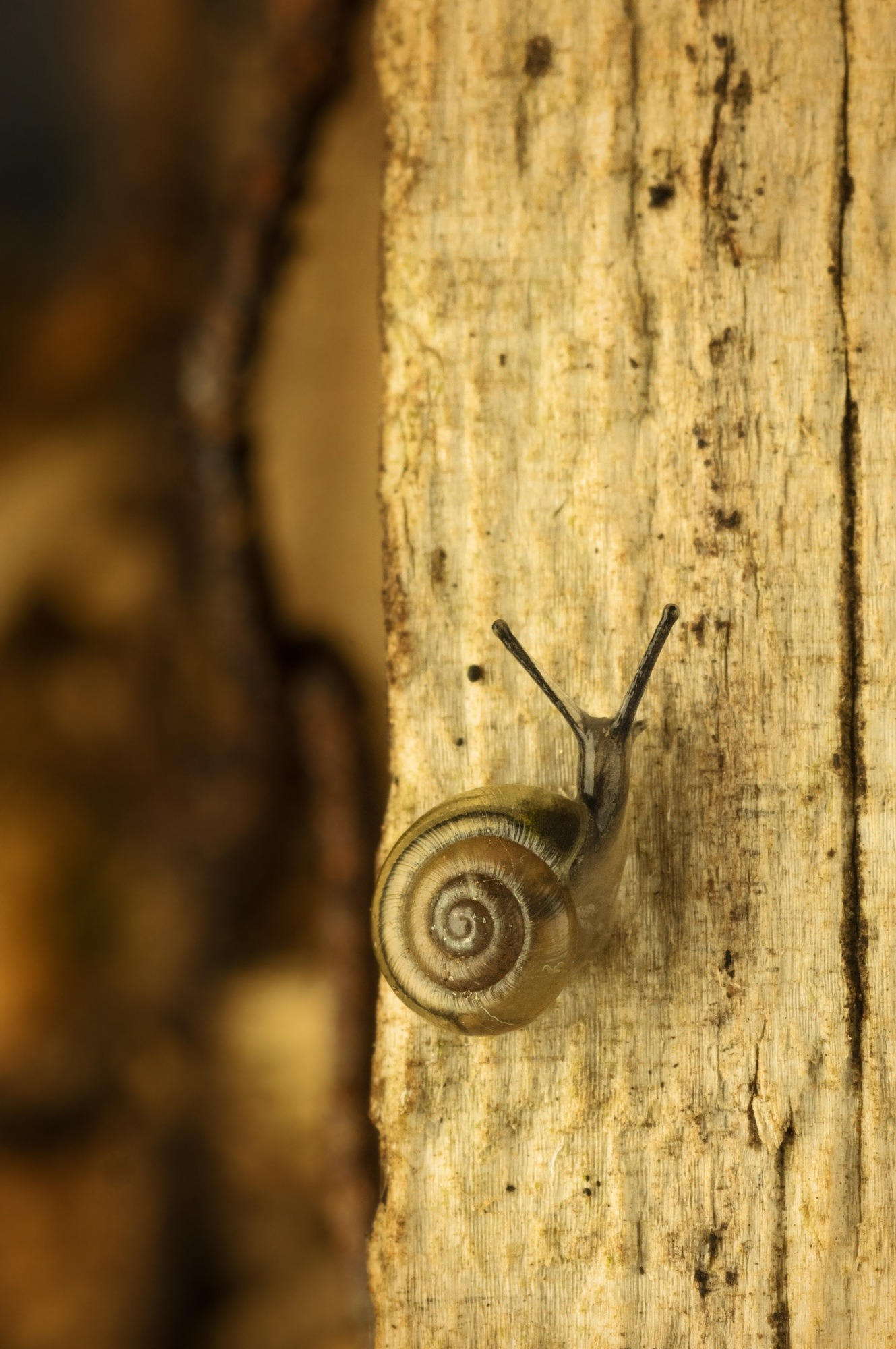 ...but surely (small snail) by Mika Andrianoelison