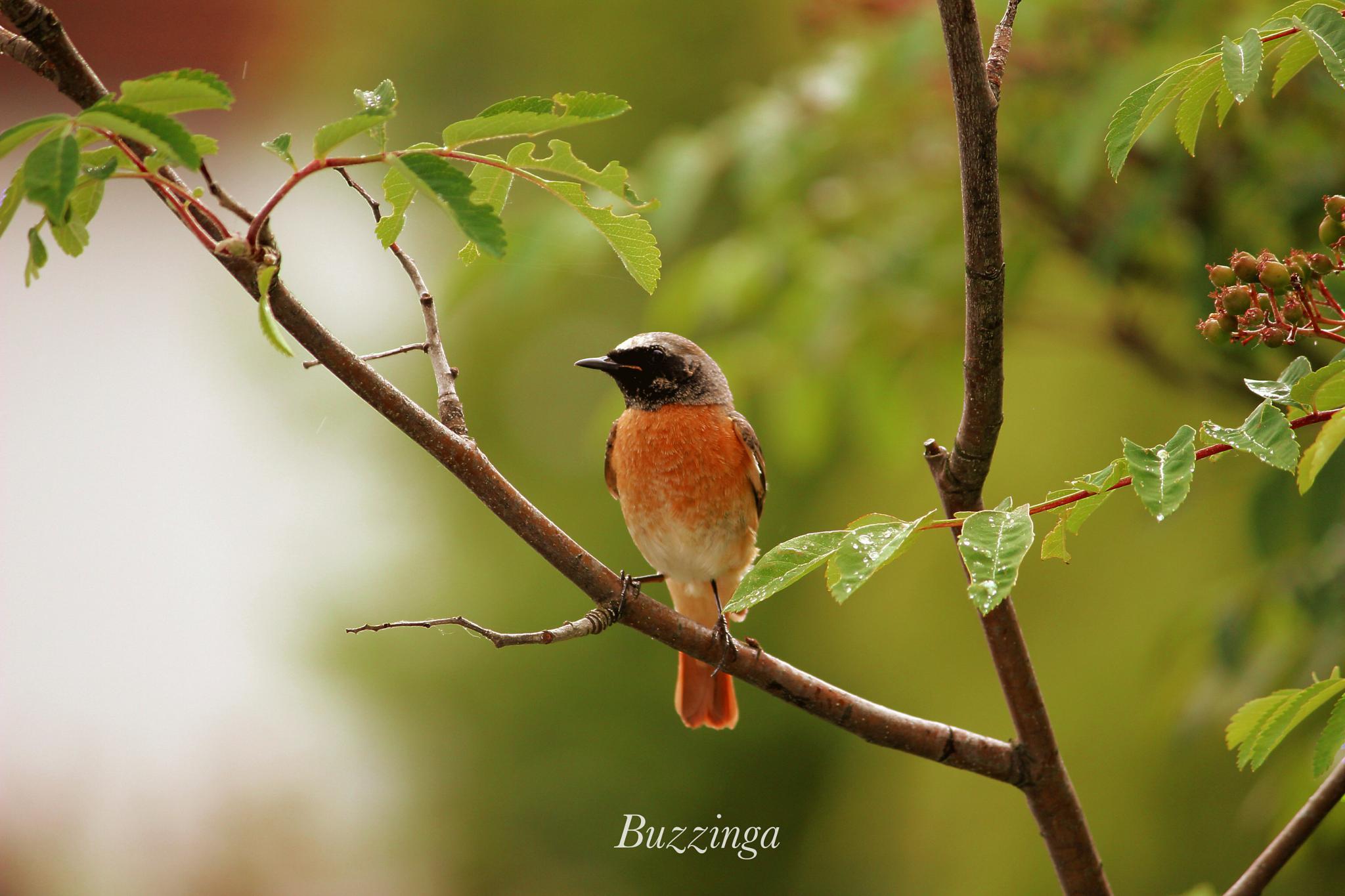 Posing for you! by buzzinga