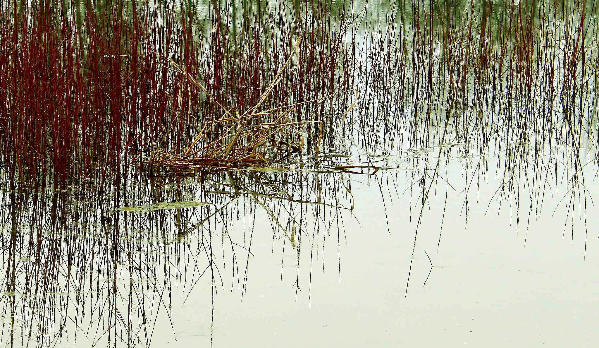 Untitled by goran.kulezic