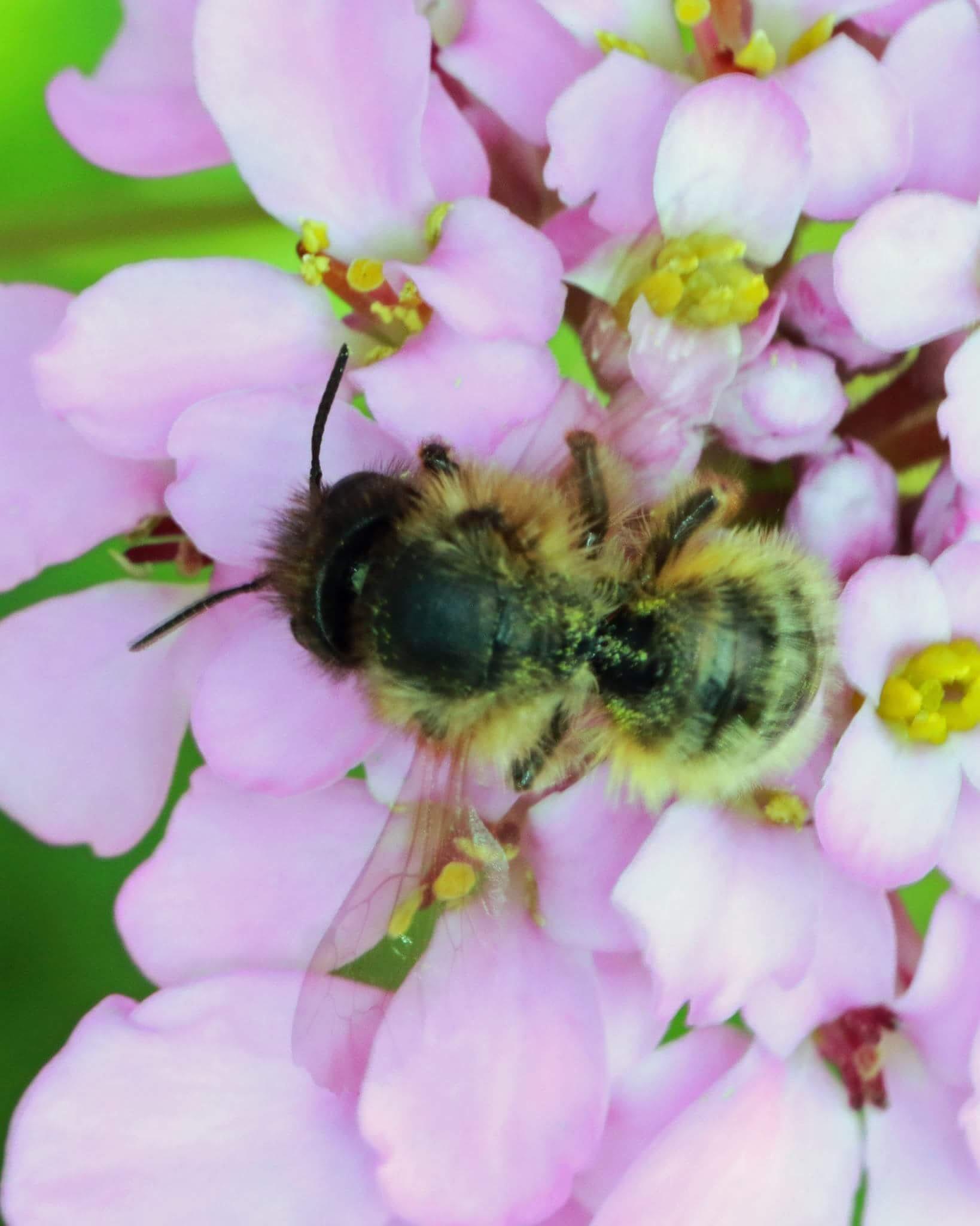 bee working by Nicholas Rawsthorne