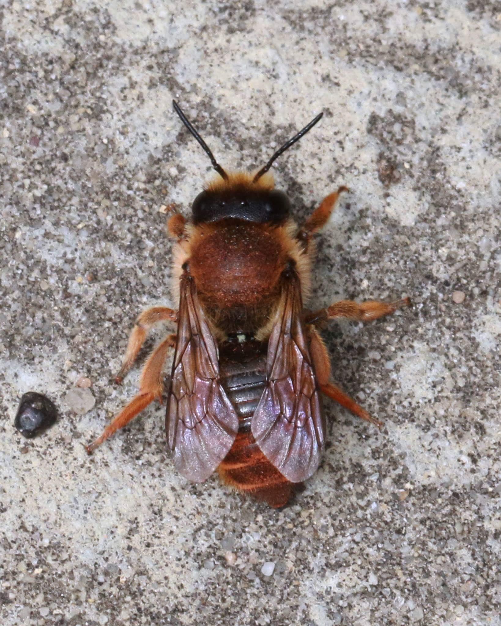 bee on paving slab by Nicholas Rawsthorne