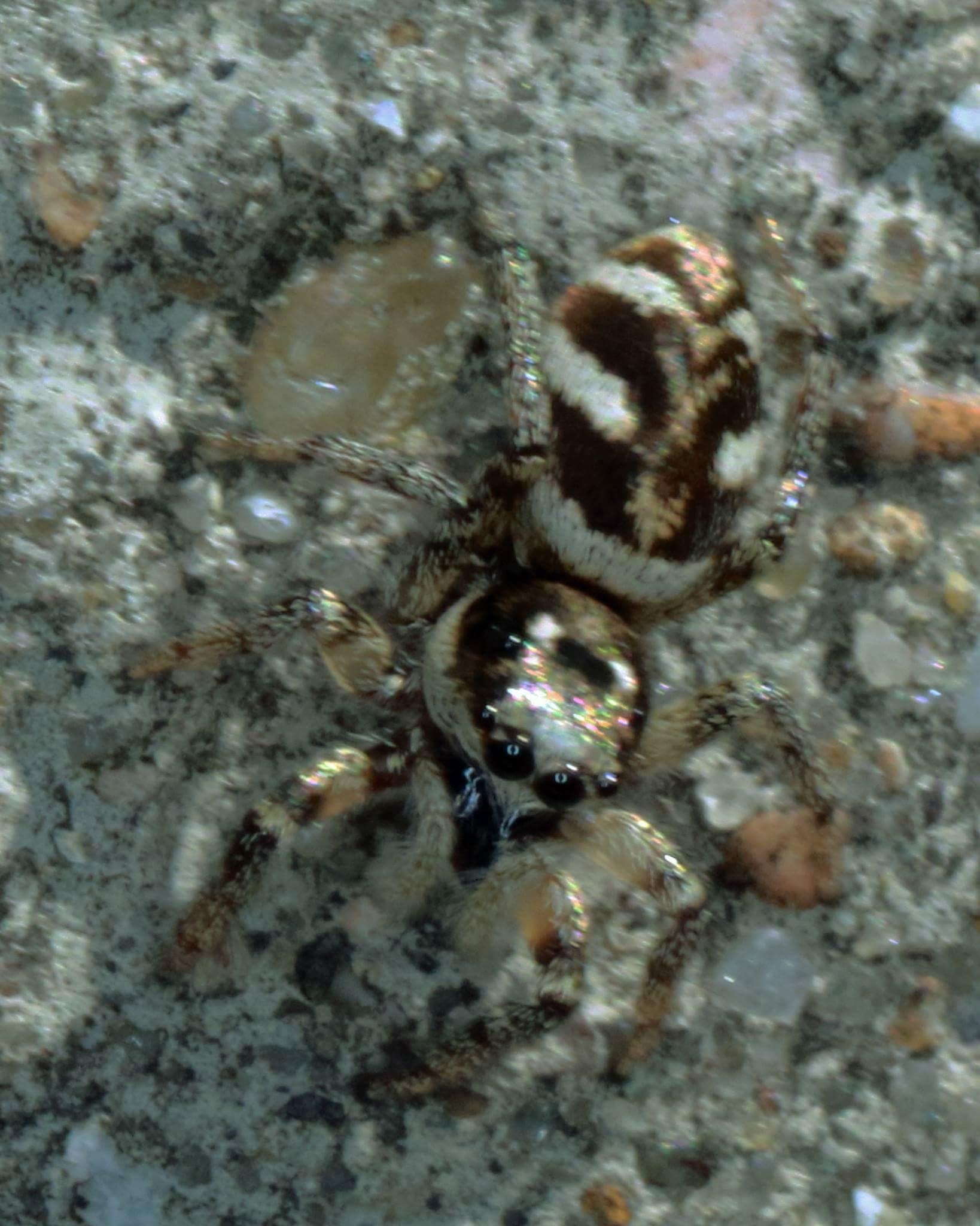 Well camoflaged spider by Nicholas Rawsthorne