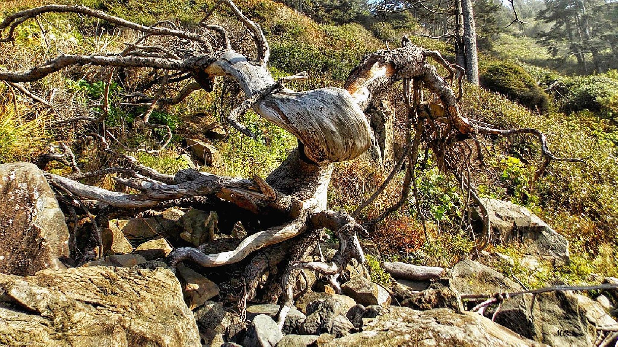 Tree Monster by michael.centner
