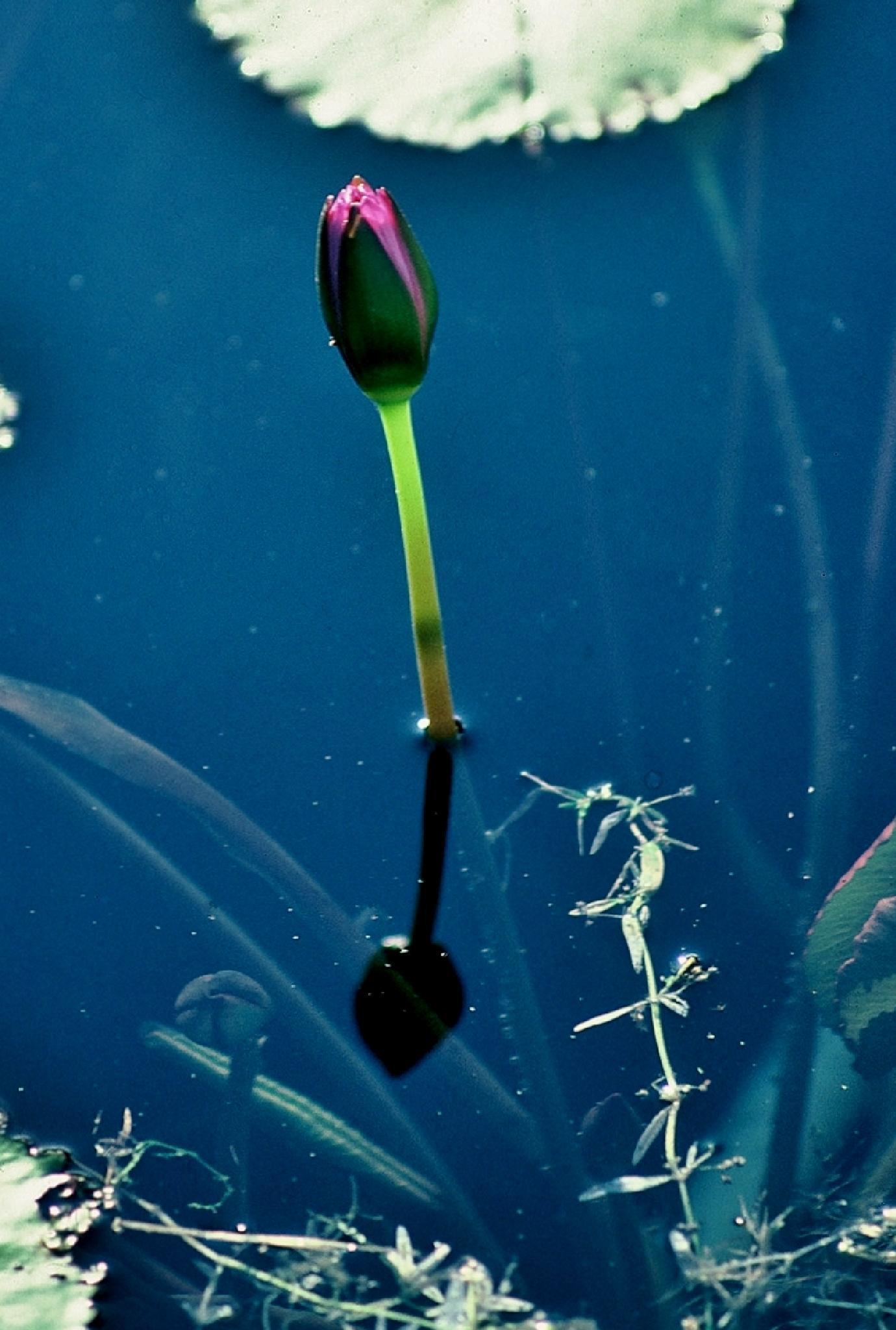 Photo in Random #flower #pond