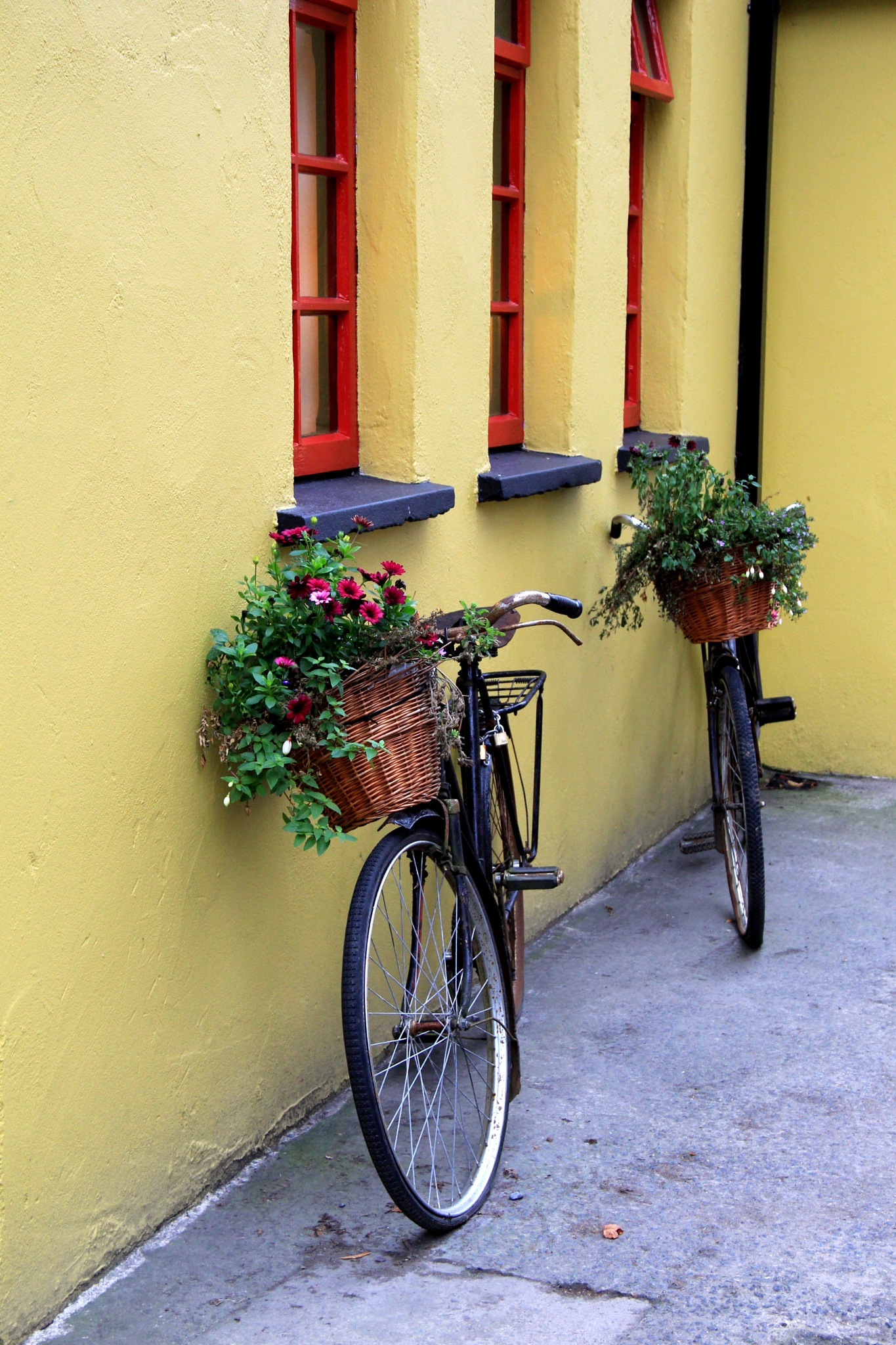 Ireland's beauty ~ everywhere you look by theresaSt.john