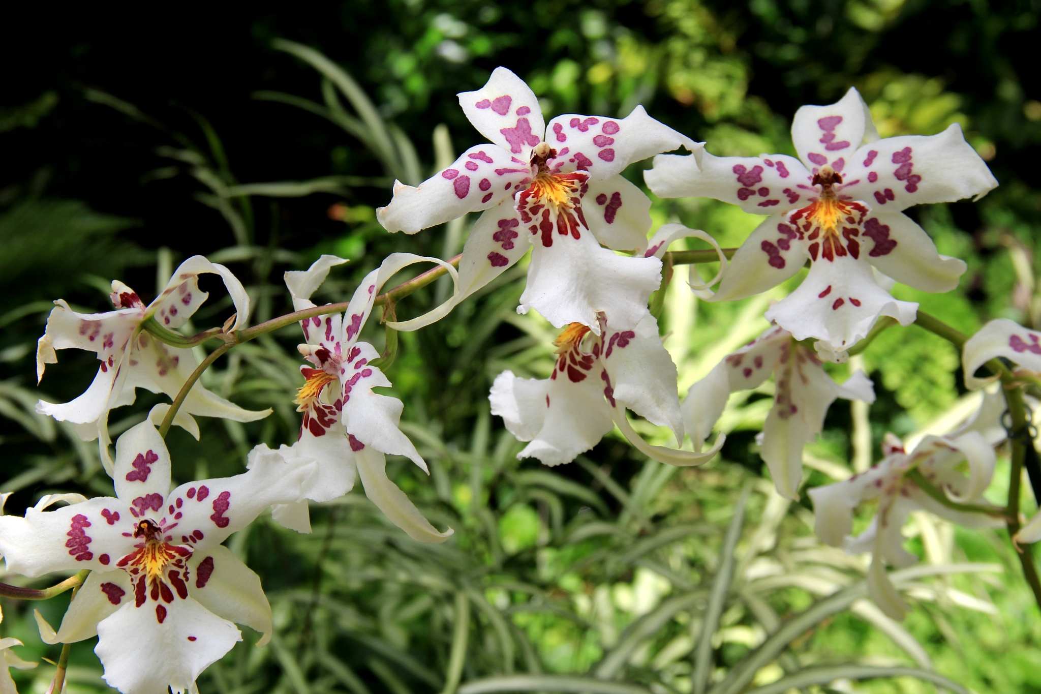 The beauty of orchids by theresaSt.john