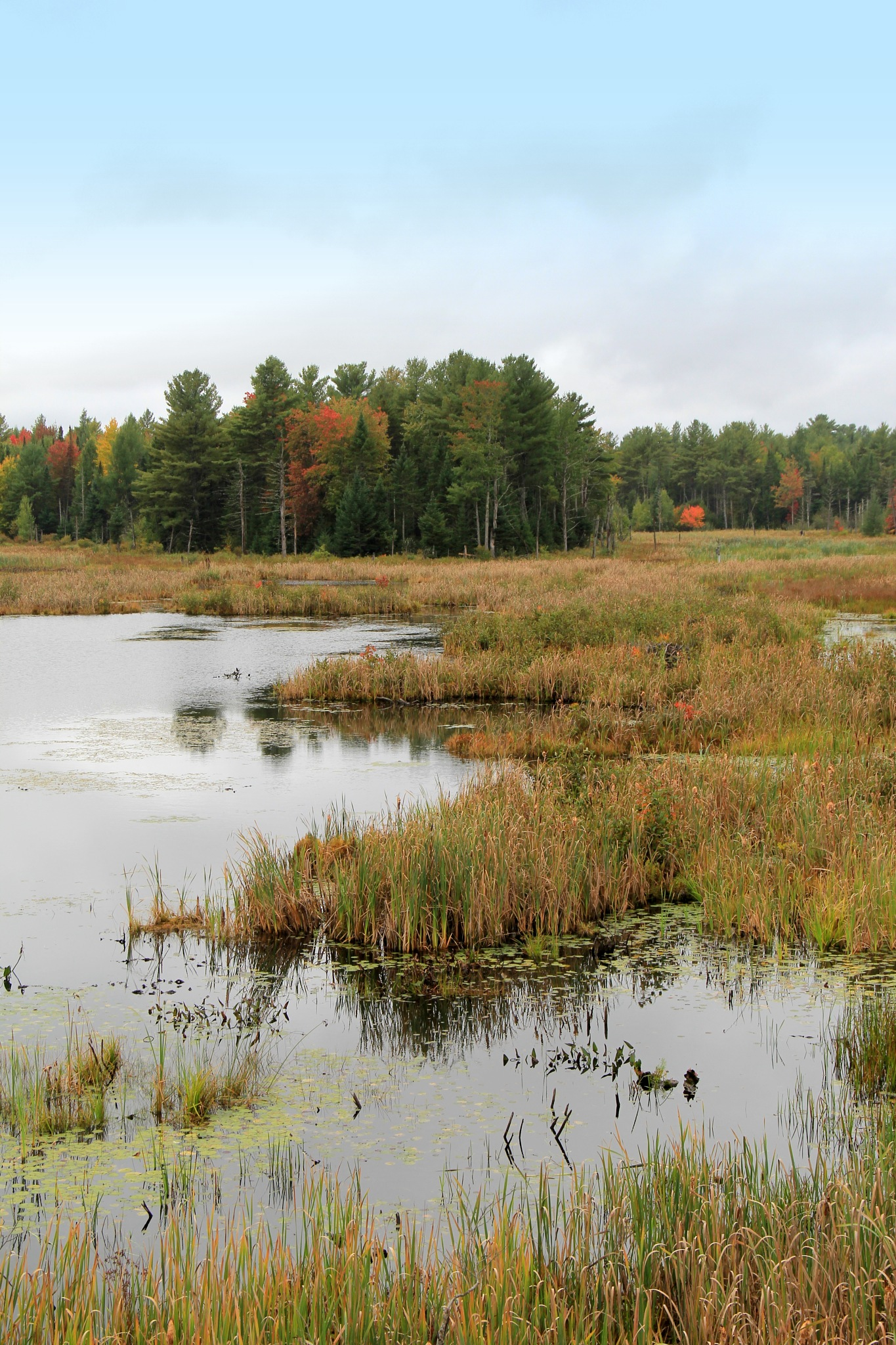The marsh of Fall by theresaSt.john