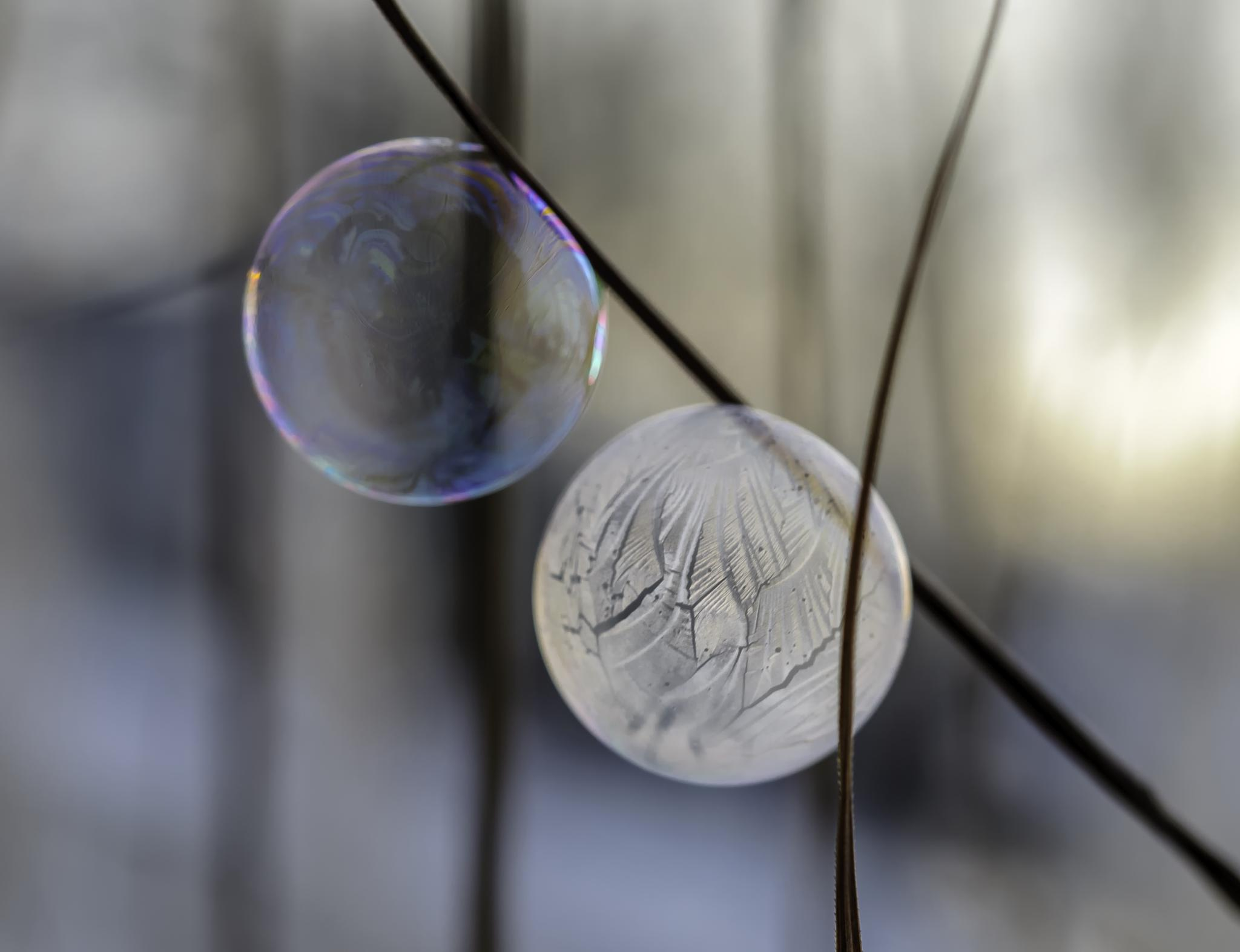 Cold Enough to Freeze Bubbles! by beth.kazda
