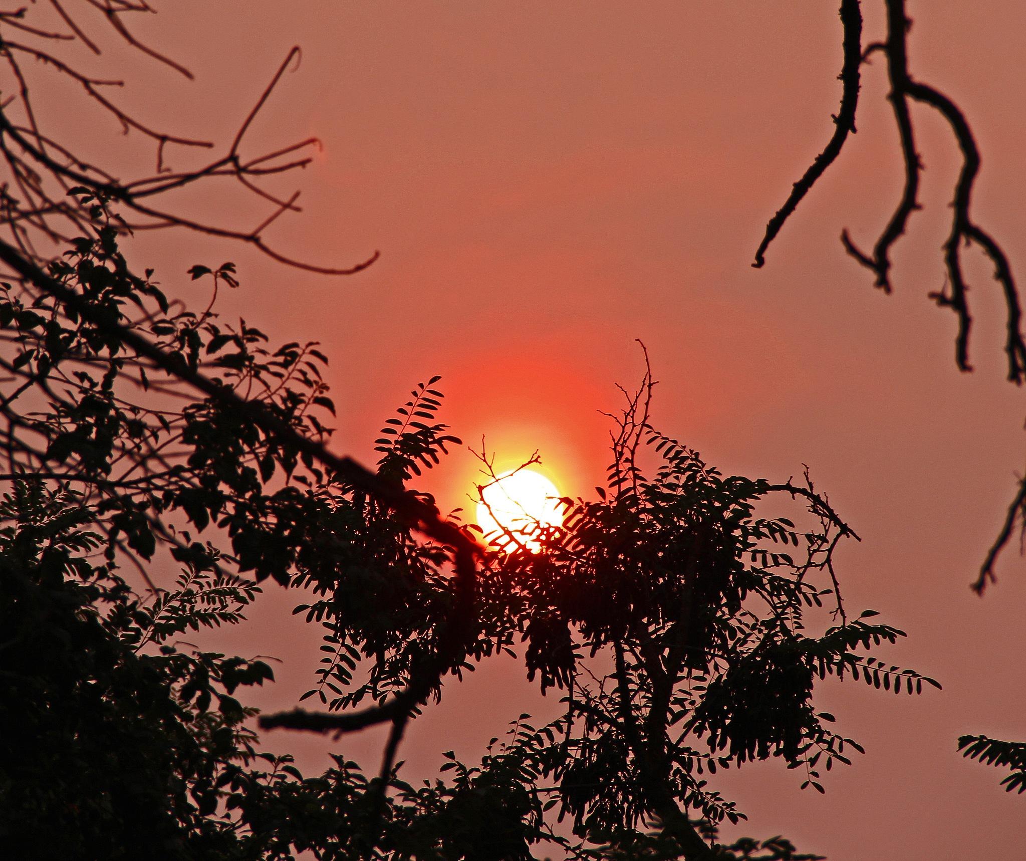 Smoked Sun 2 by christena.anderson