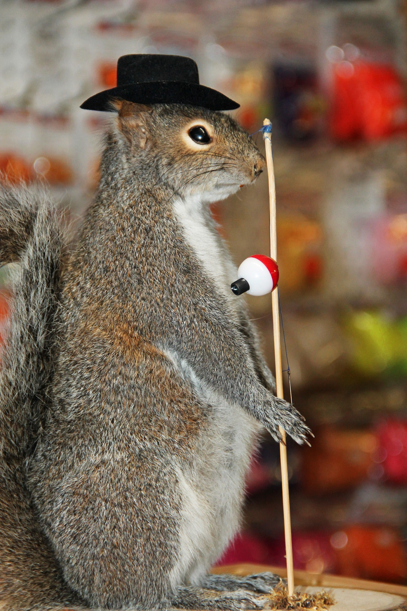 Just a Squirrel Goin' Fishing by christena.anderson