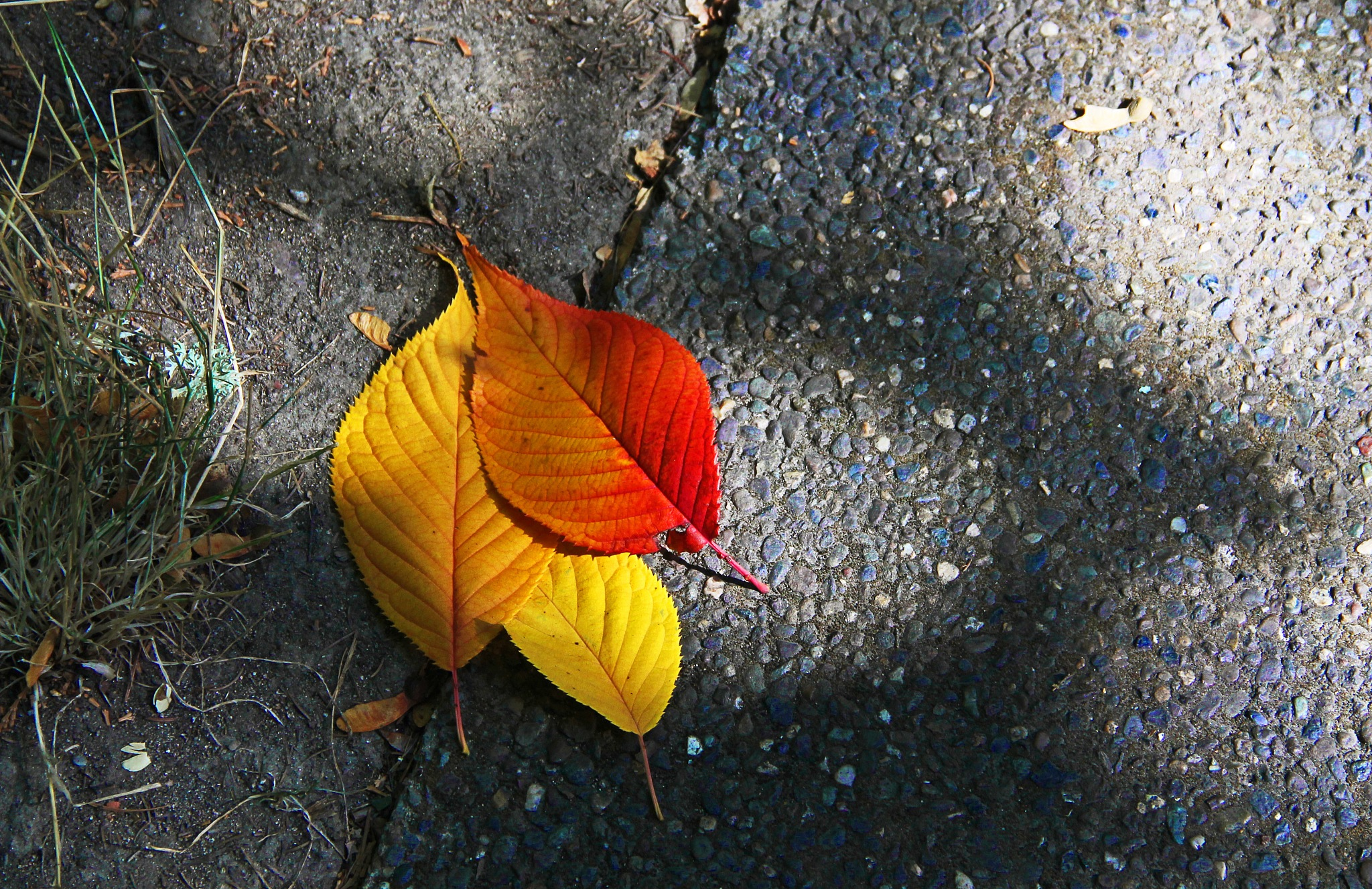 Leaves in Triplicate by christena.anderson