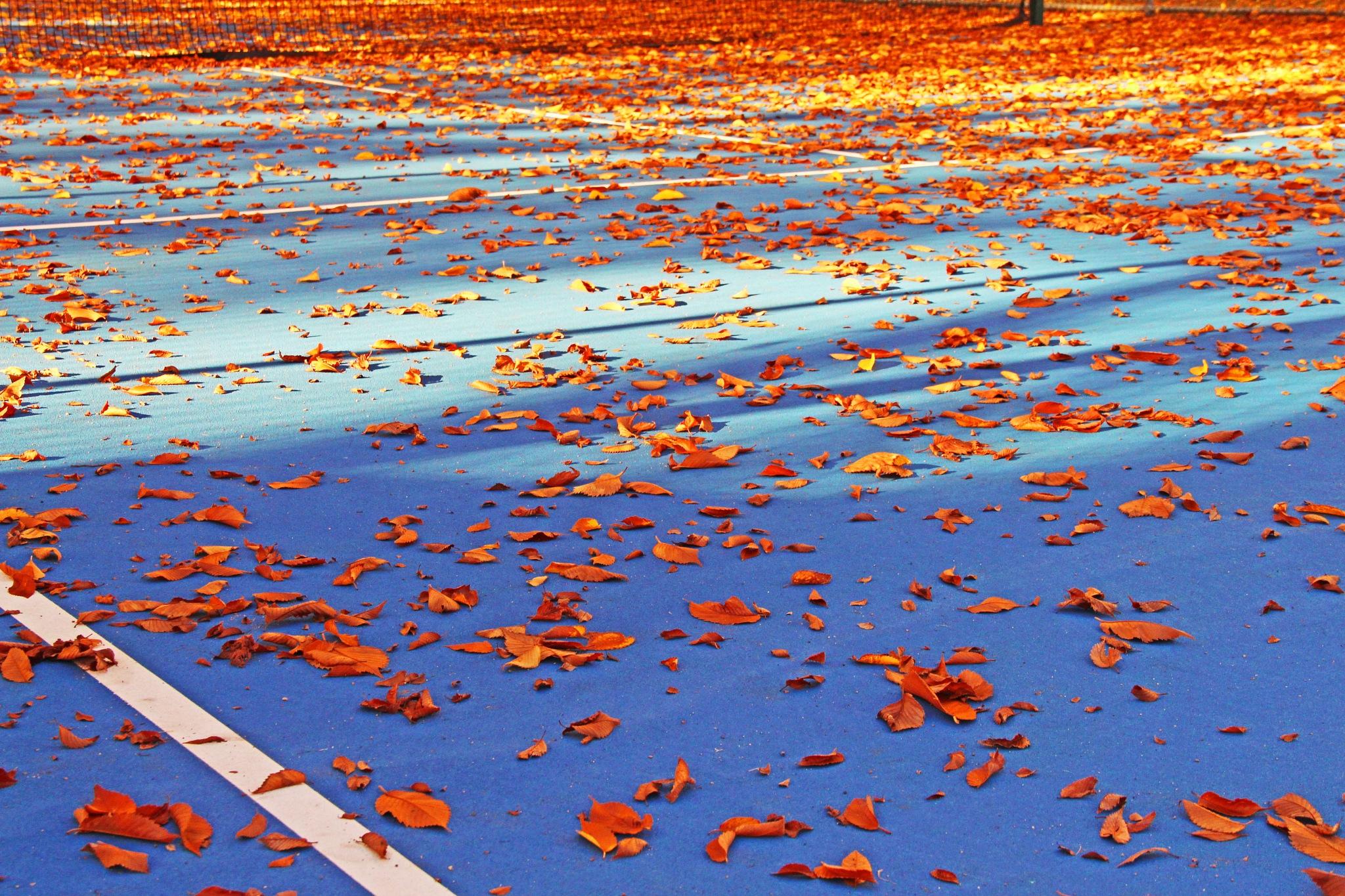 Leaves Feelin' Blue by christena.anderson