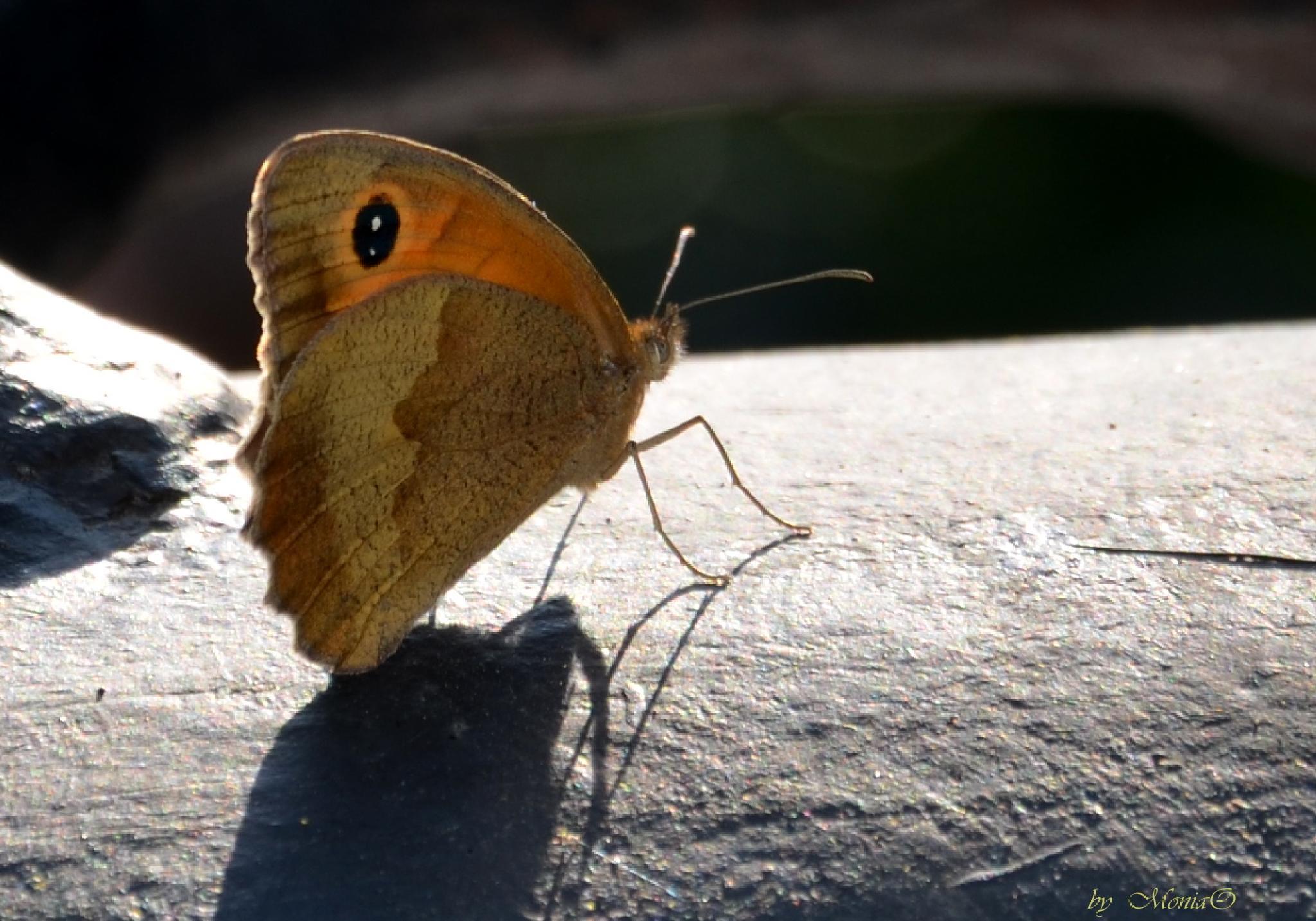 Butterfly... by Monika Oko