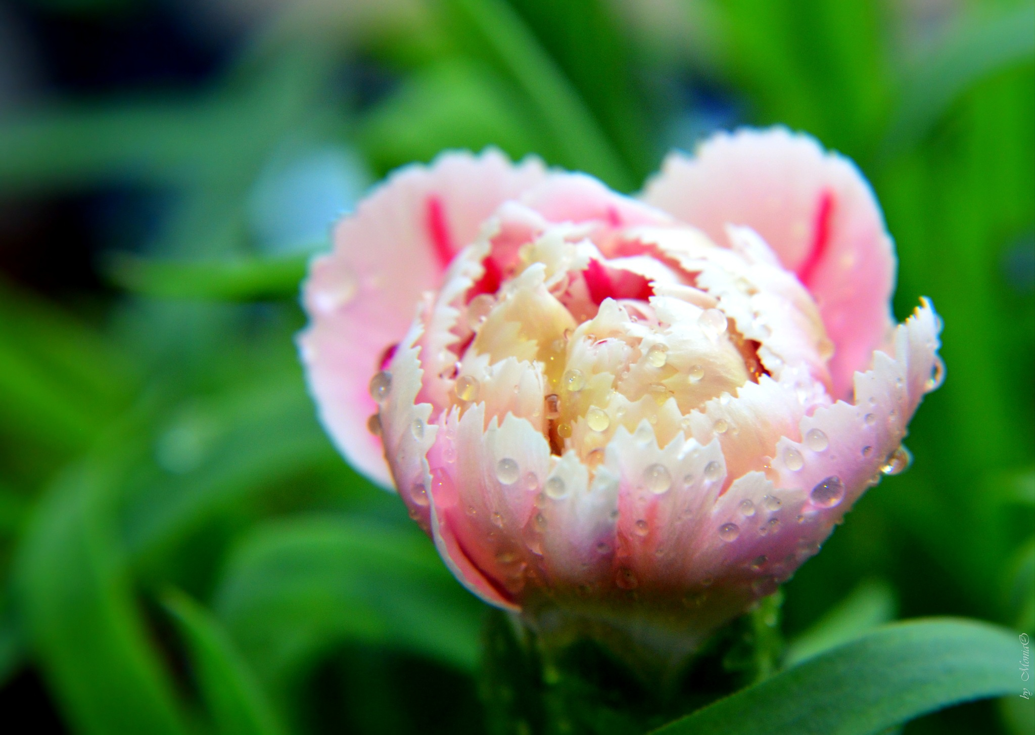 Spring flover by Monika Oko