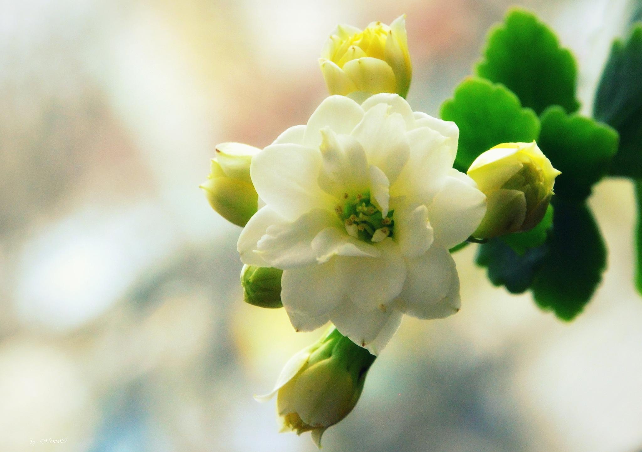 Spring by Monika Oko