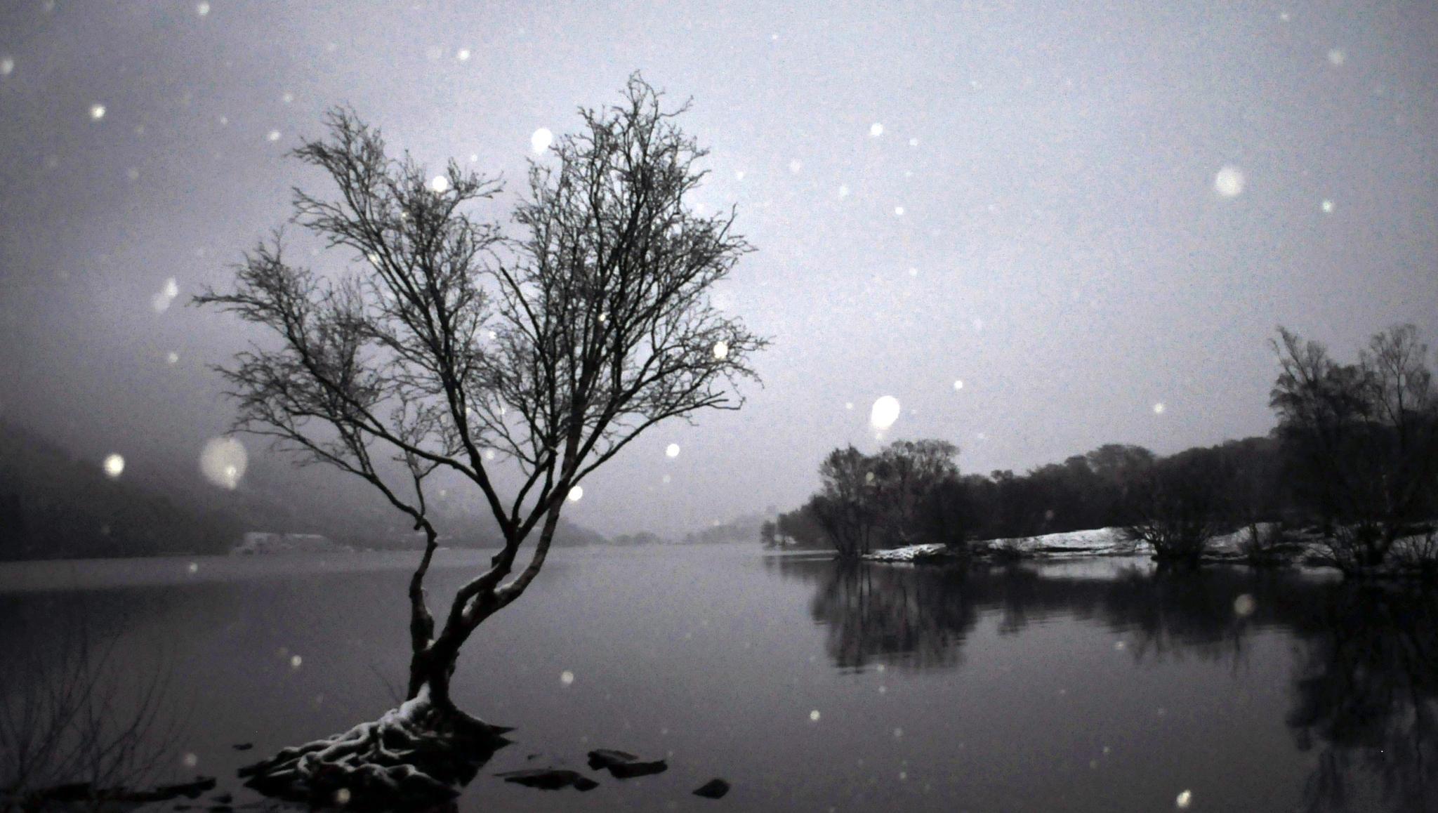Snowing on tree&padarn lake. by hefin.owen