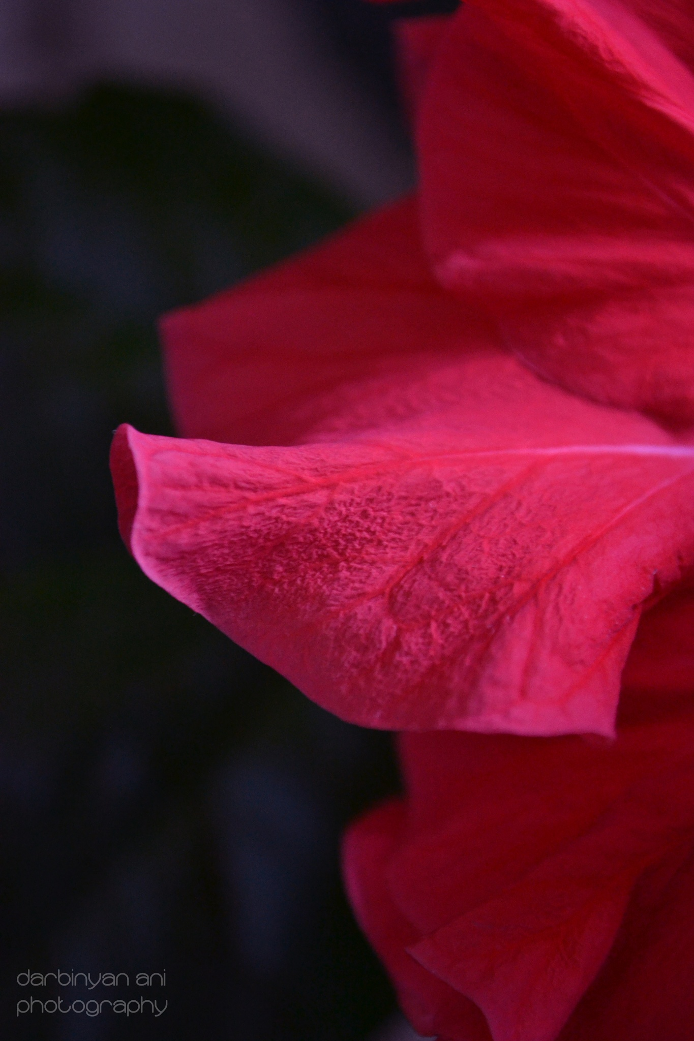 Red Red Red by ani darbinyan