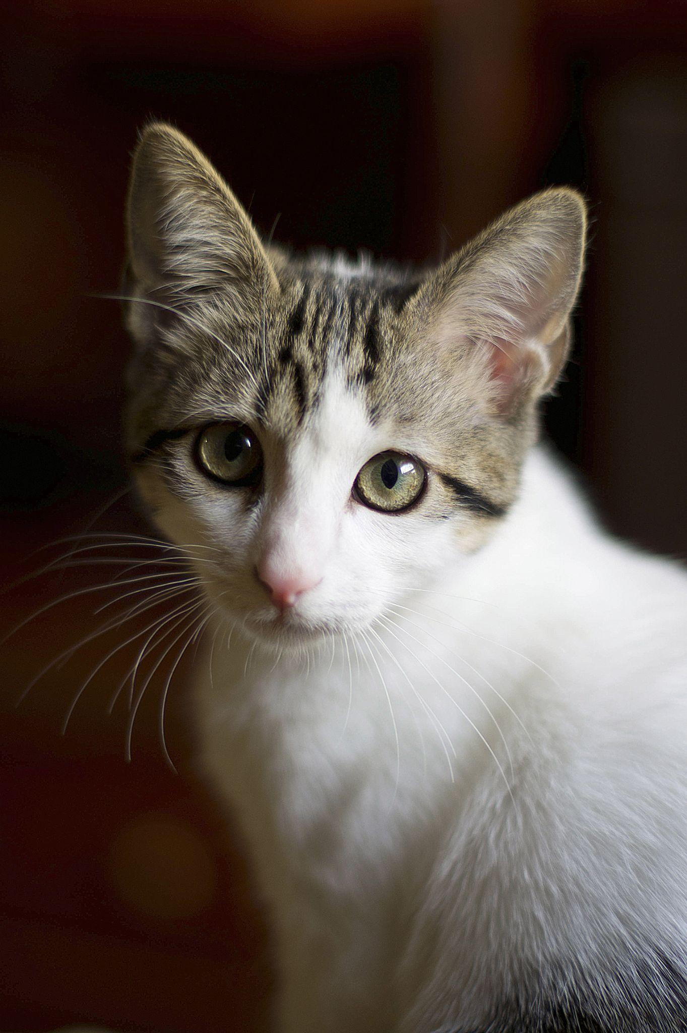 My Cat by ddsfotografia