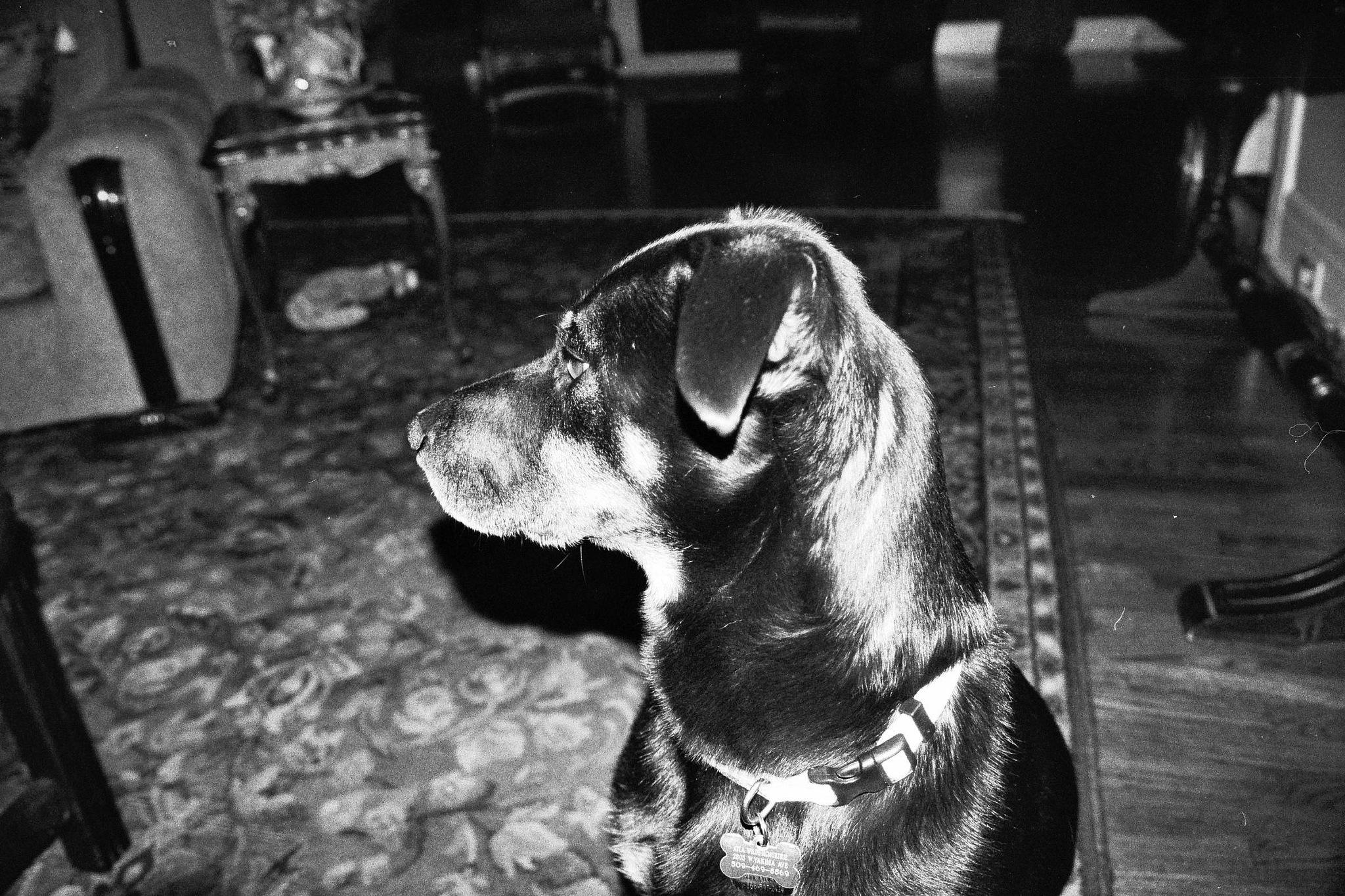 Portrait of my dog by jeniferwilde