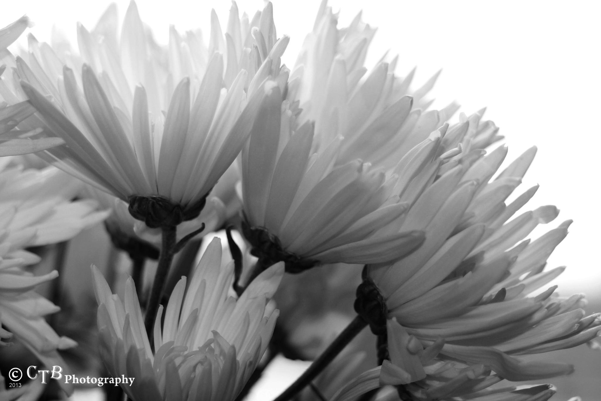 FLOWER PETALS 3 by Carol Thomas Burns