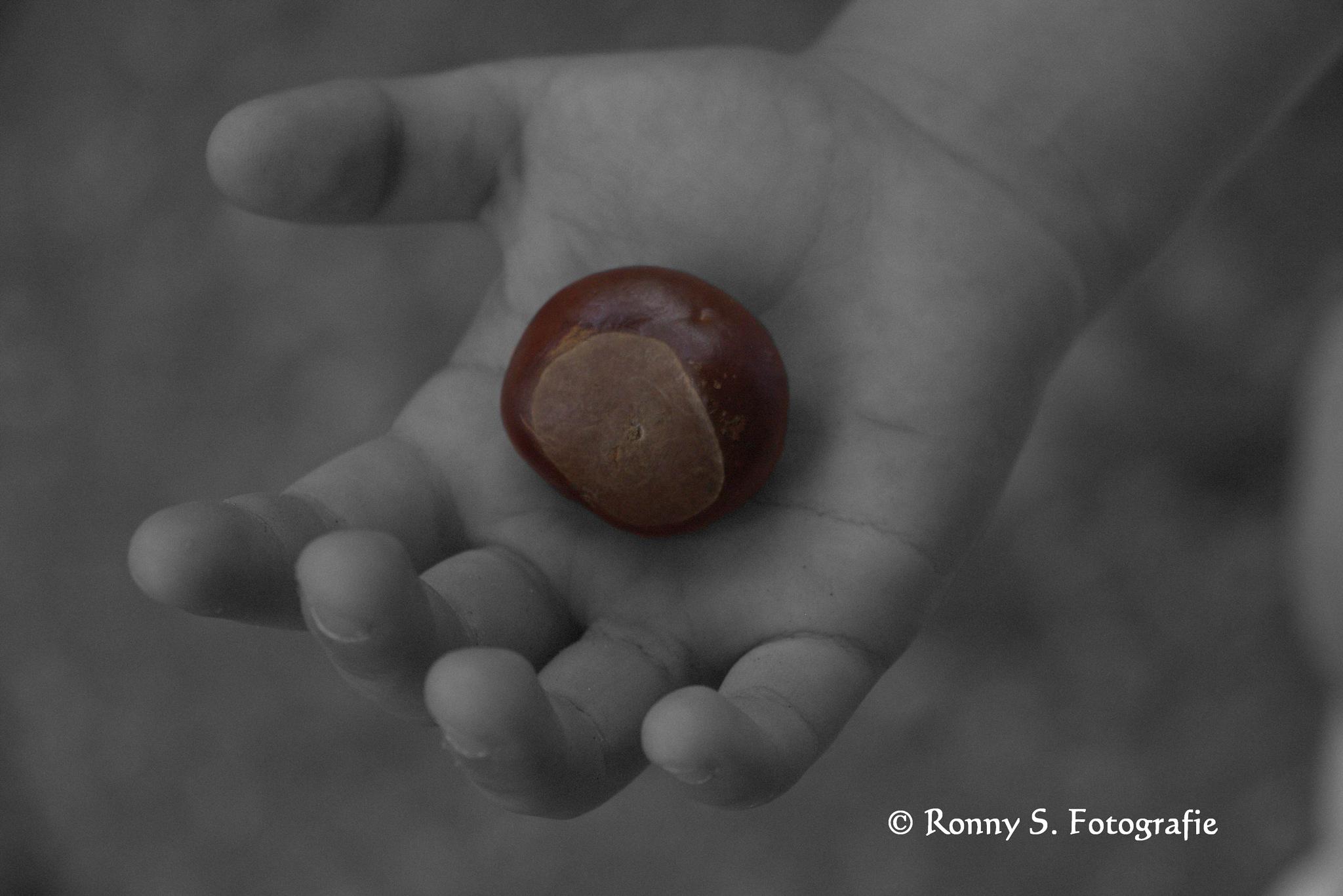 Child holding chestnut. by ronny.schwarze.75