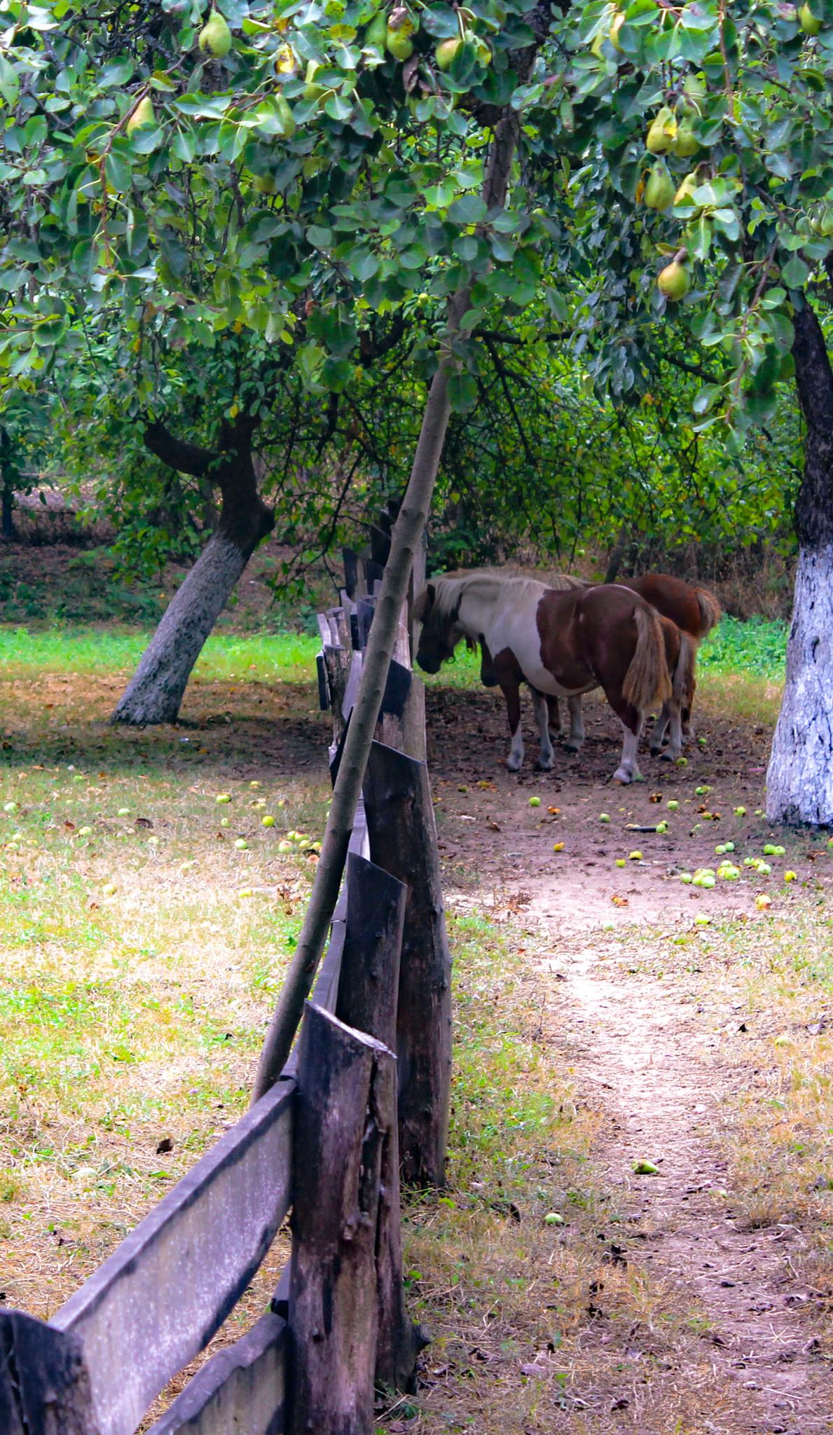 because... horses by Lucian-Mihai Purici
