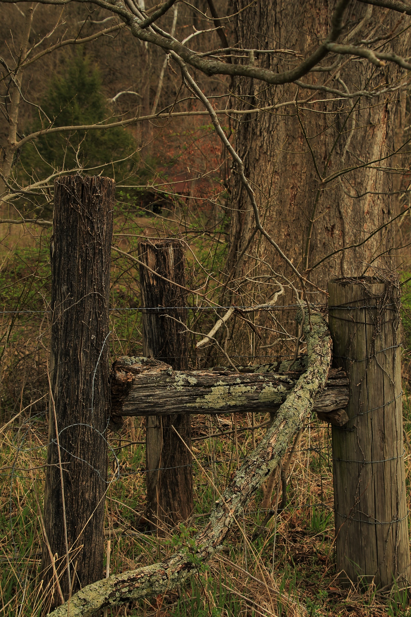 Corner Fence Posts by robin.smith.3150