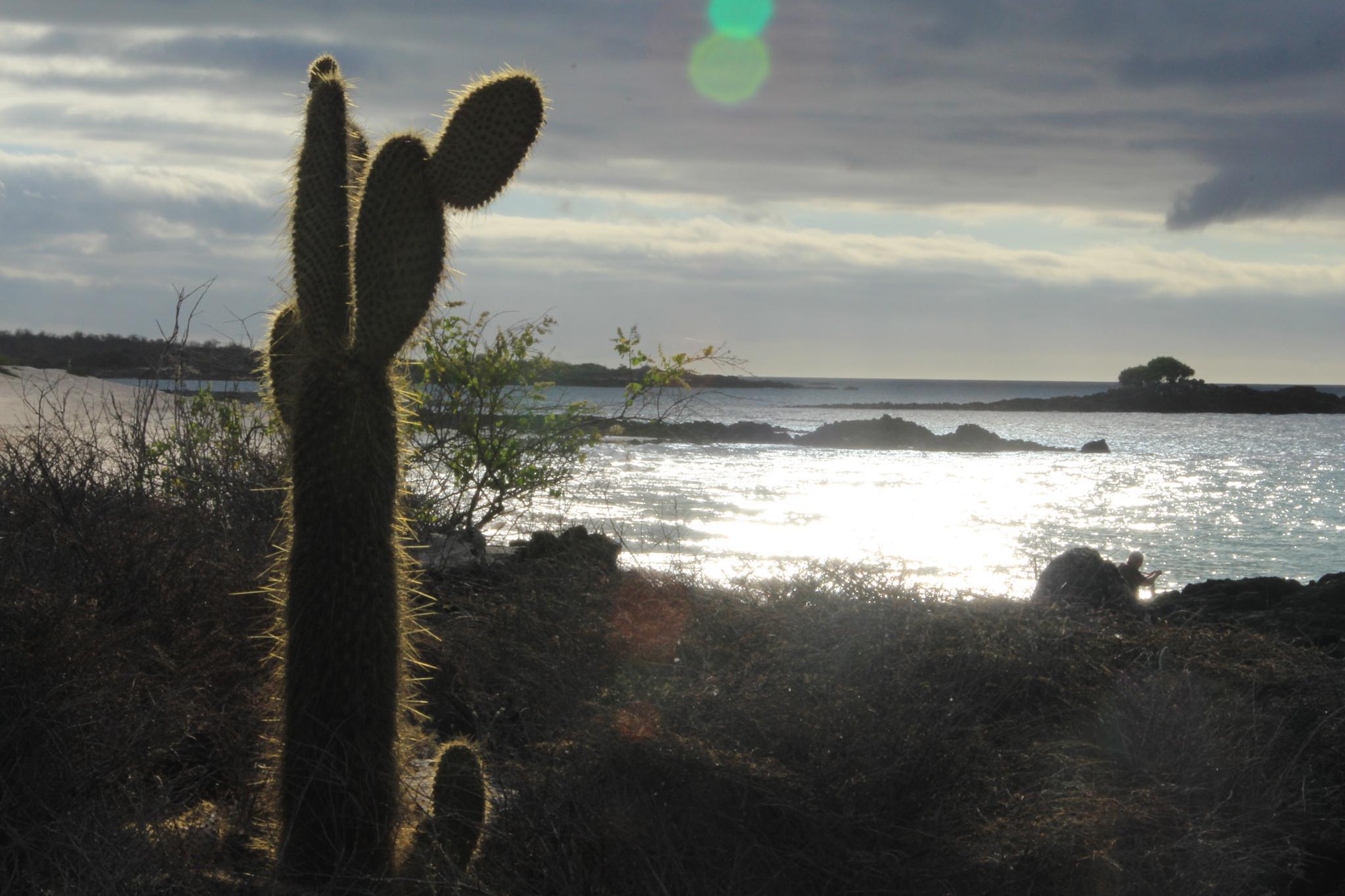 Island Cactus by robin.smith.3150